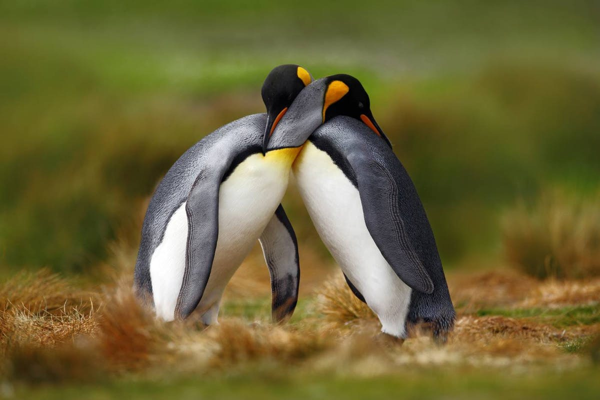 Celebrating queerness, gender expression, and sexual diversity in the natural world