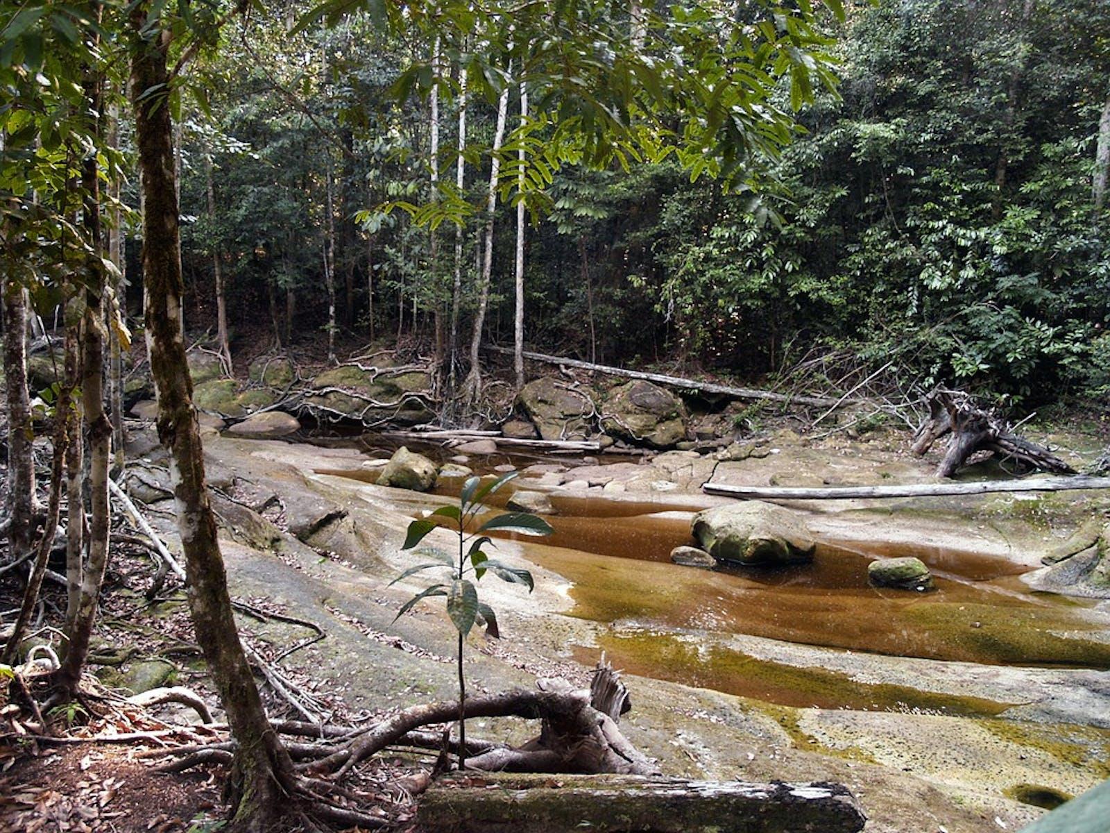 Uatumã-Trombetas Moist Forests