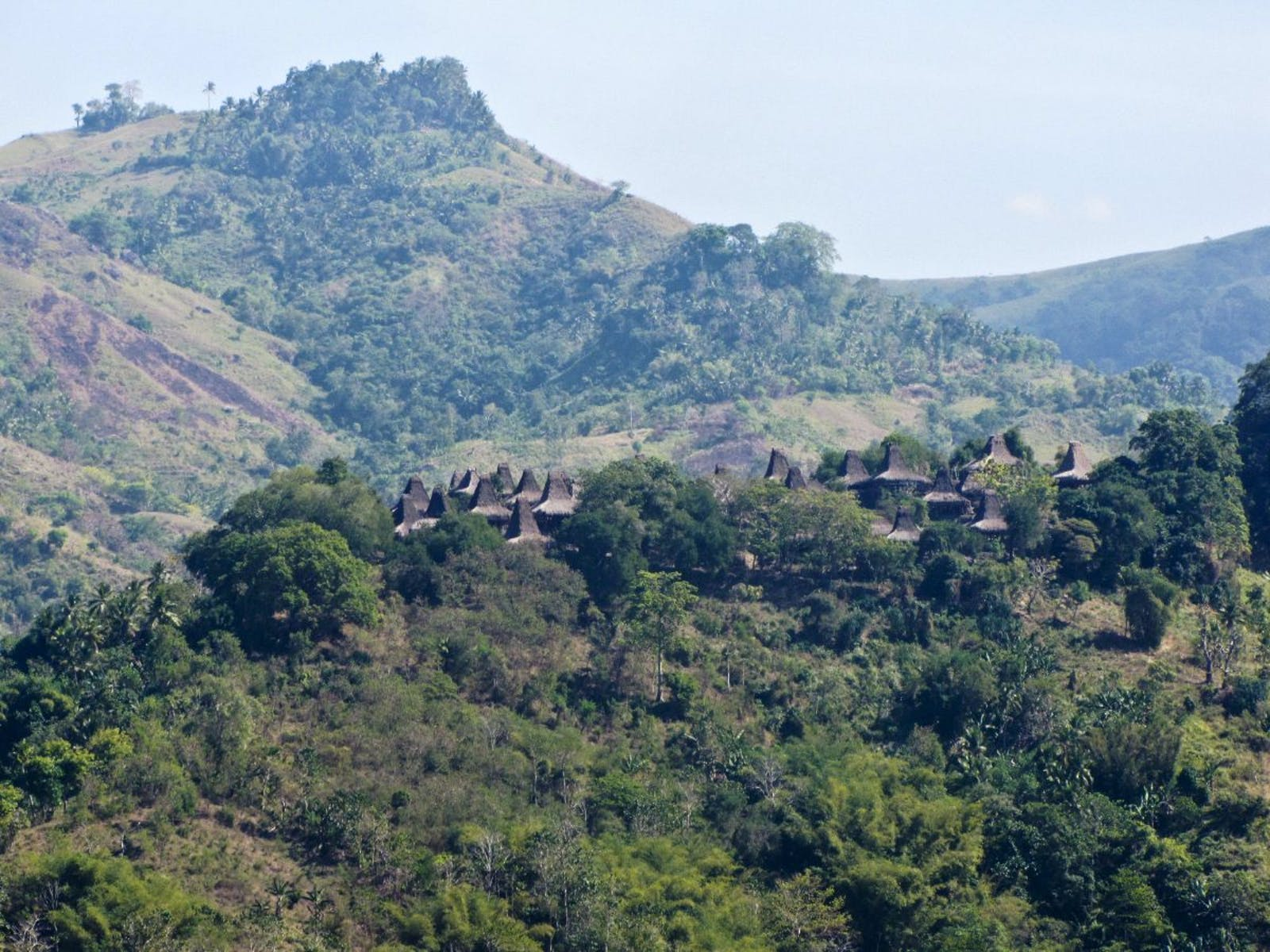 Sumba Deciduous Forests