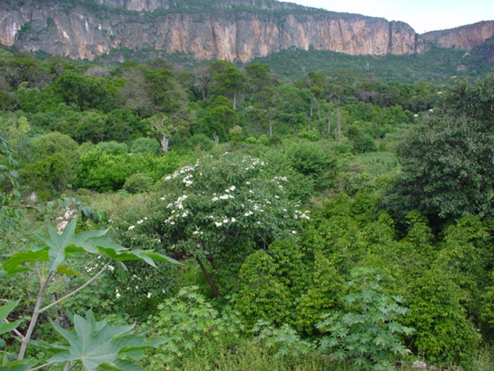 Somali Montane Xeric Woodlands