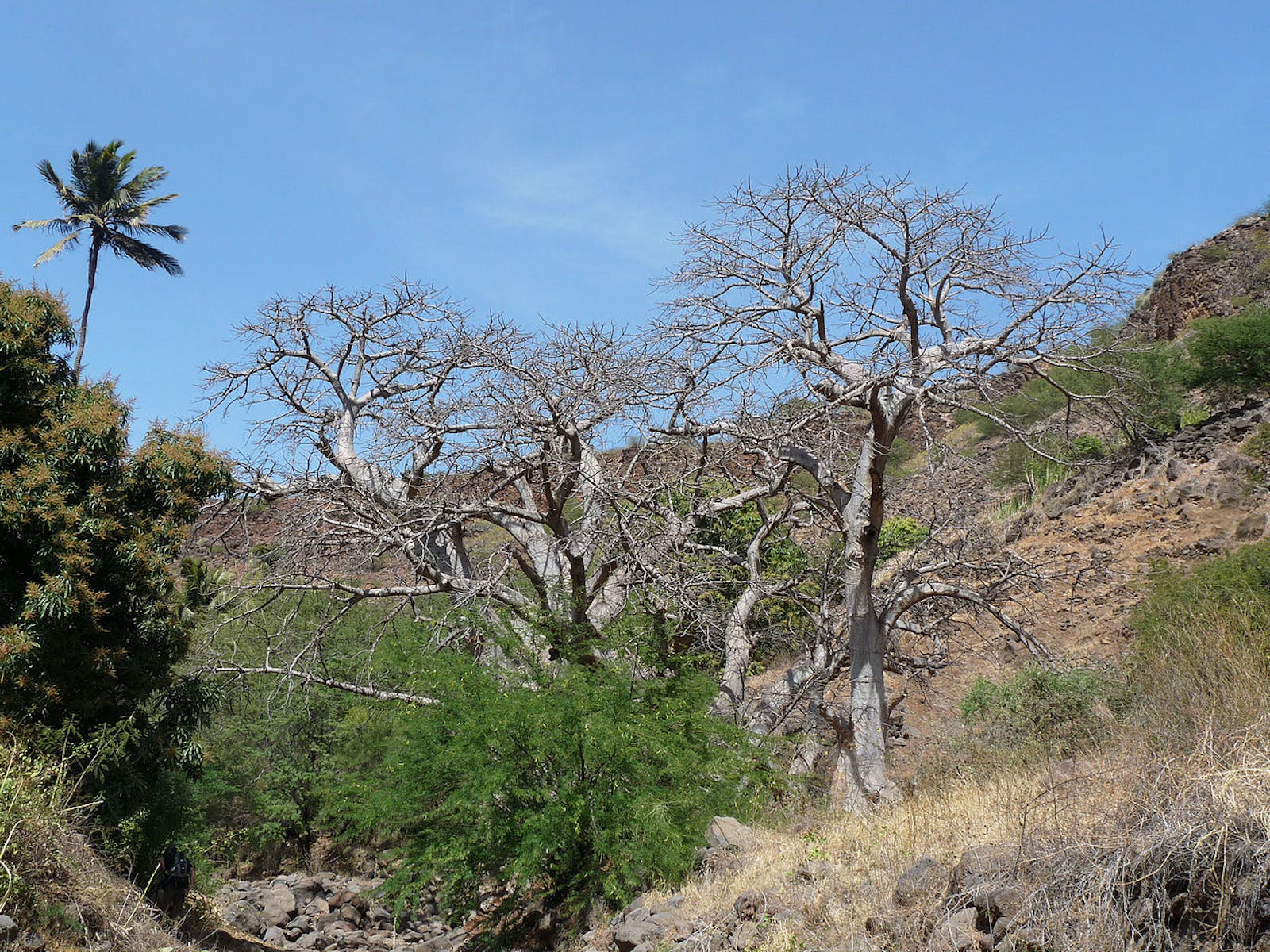 Cape Verde Islands Dry Forests