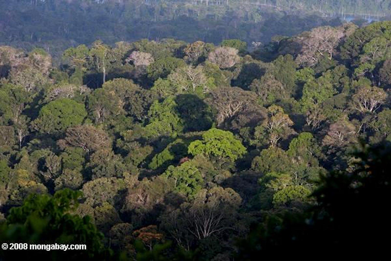 Guianan Lowland Moist Forests