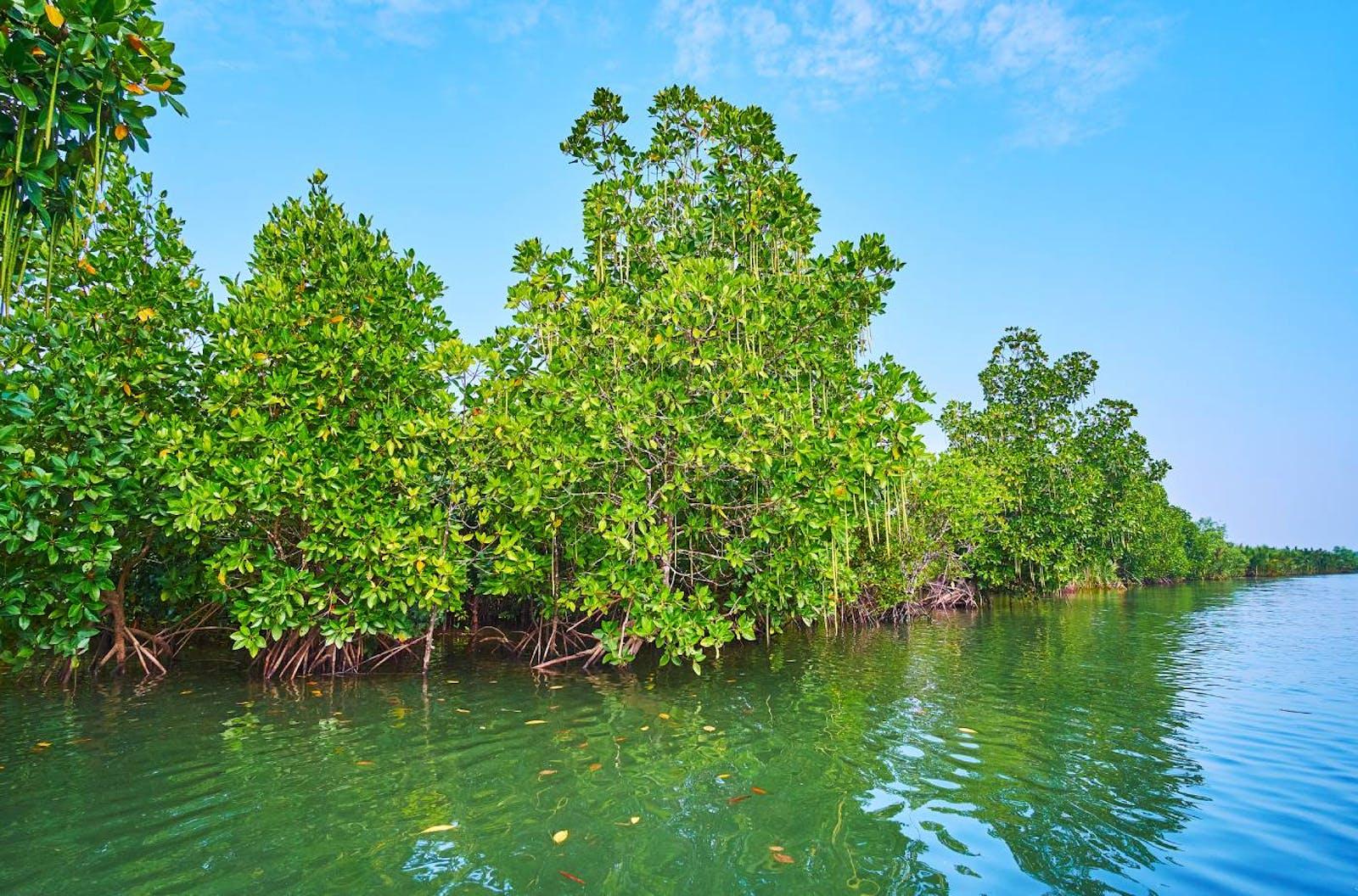Myanmar Coast Mangroves