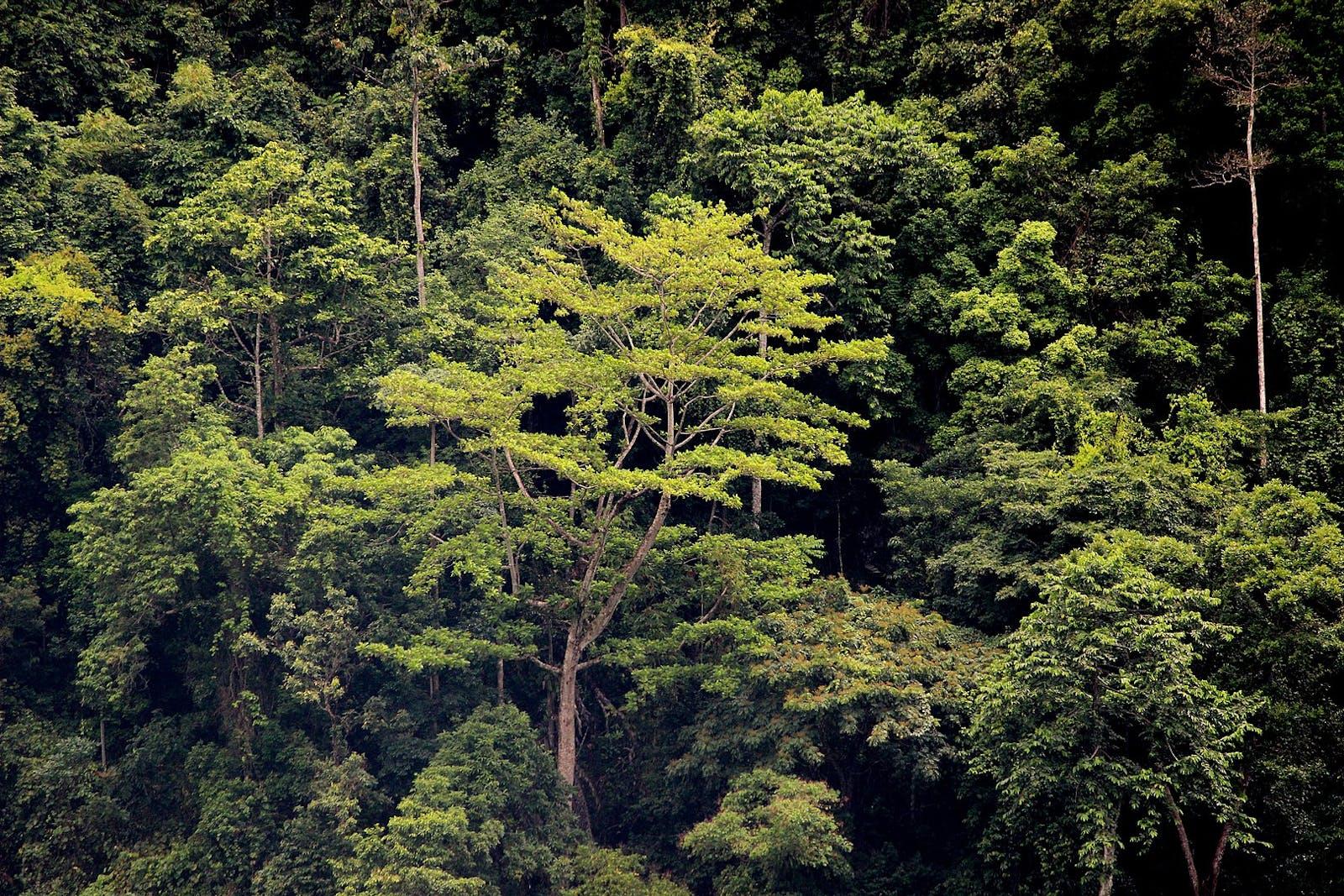 Seram Rainforests