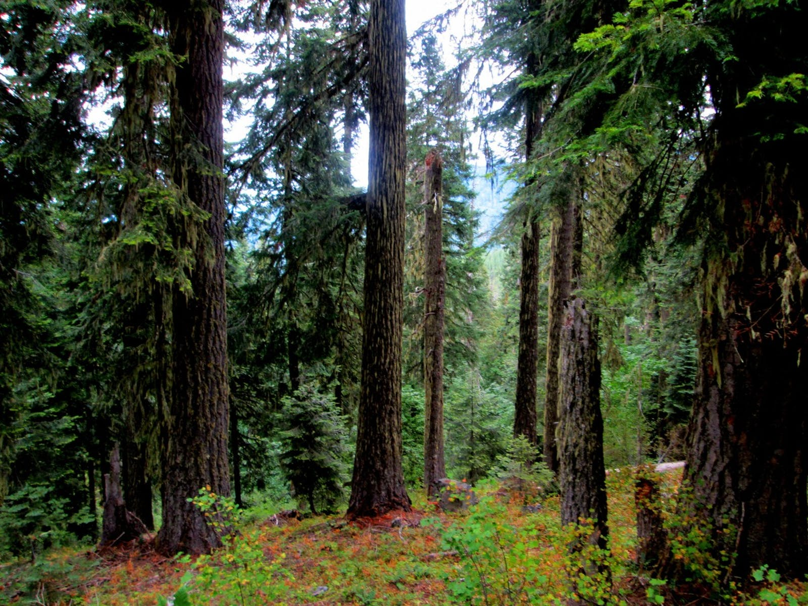 Klamath-Siskiyou Forests