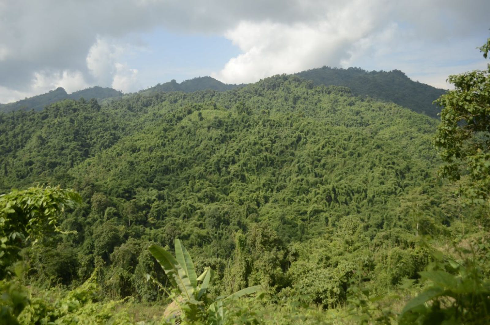 Mizoram-Manipur-Kachin Rainforests