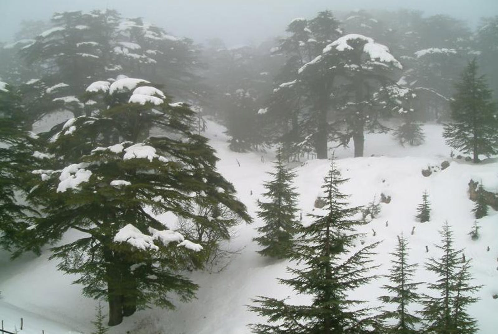 Southern Anatolian Montane Conifer and Deciduous Forests