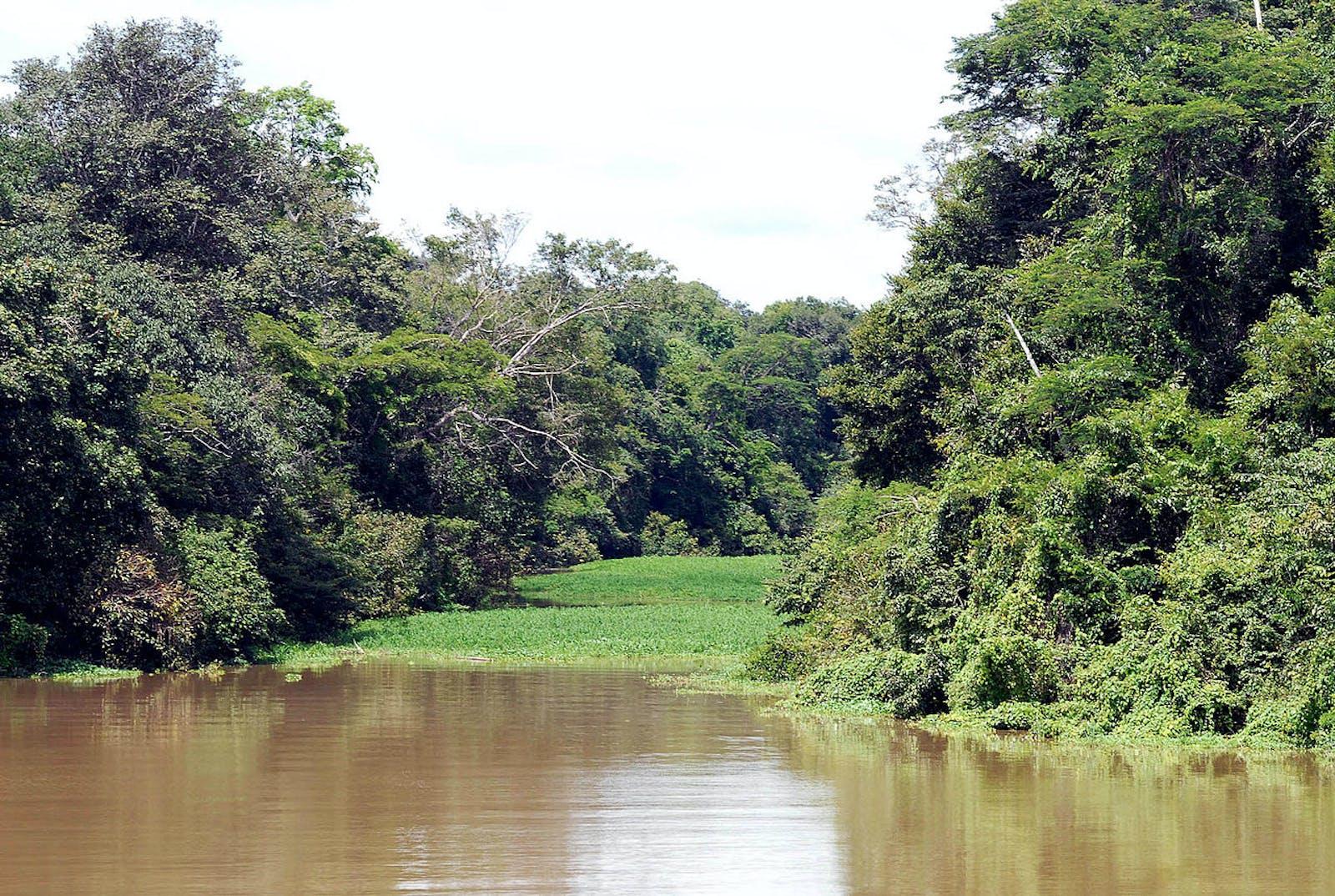 Juruá-Purus Moist Forests