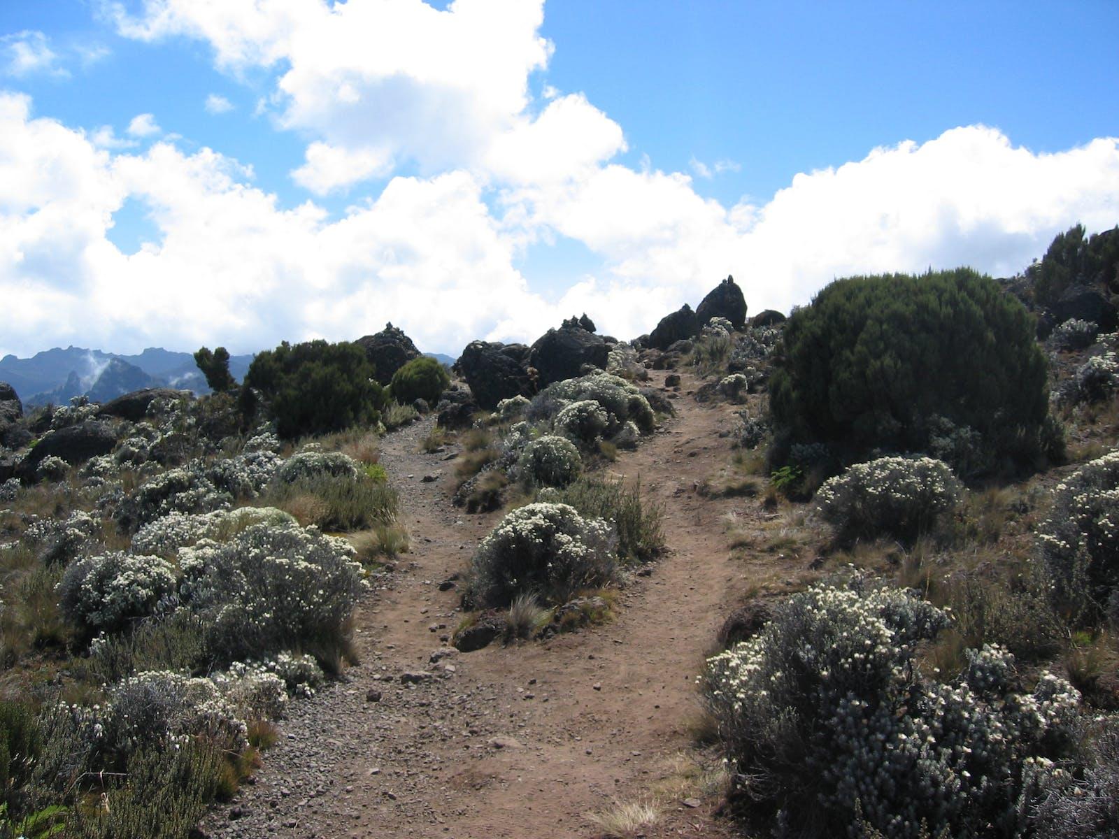East African Montane Moorlands