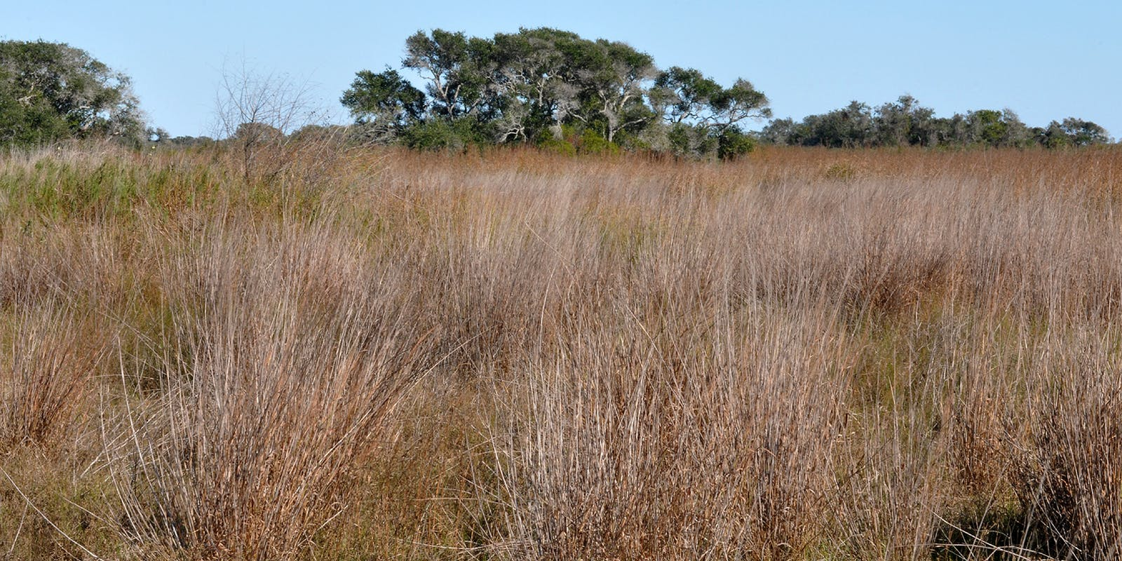 Western Gulf Coastal Grasslands