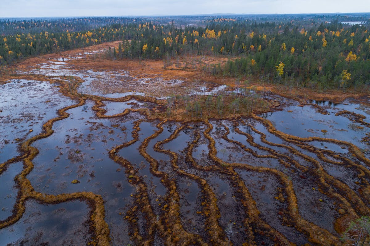 Conserving the Carbon Storehouse in the Marshlands of Ranua, Finland