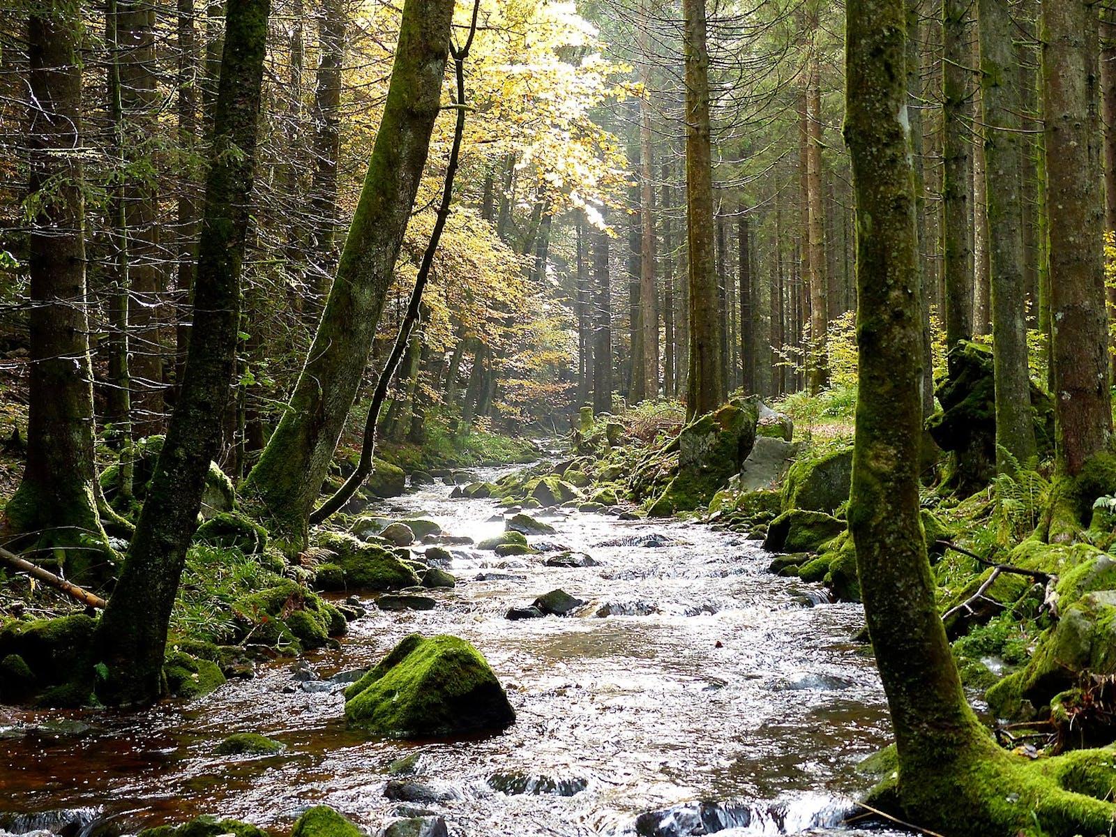 Western European Broadleaf Forests