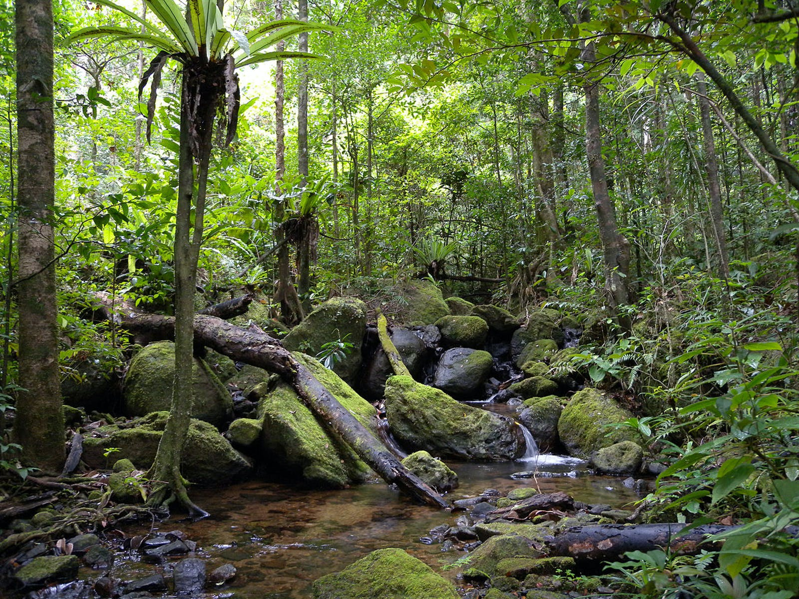 Madagascar Humid Forests