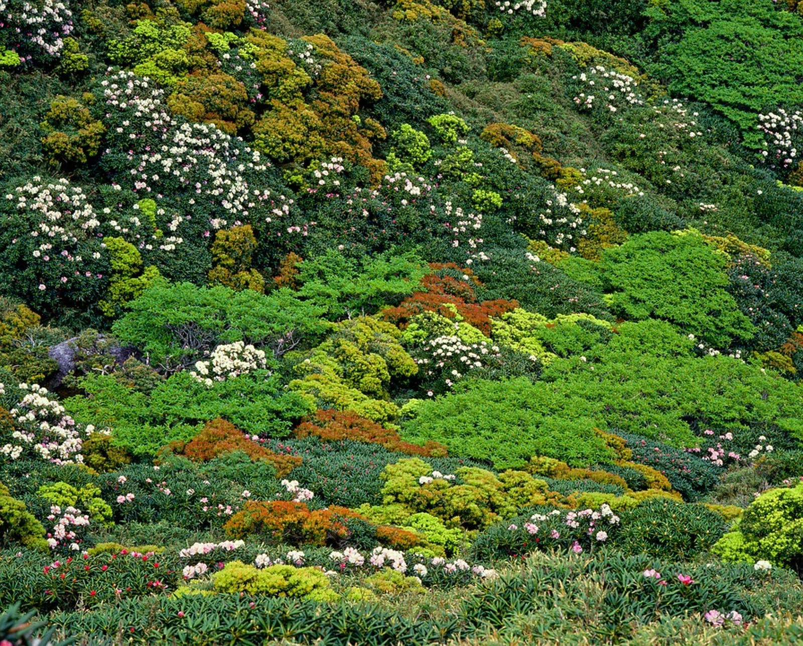Nansei Islands Subtropical Evergreen Forests