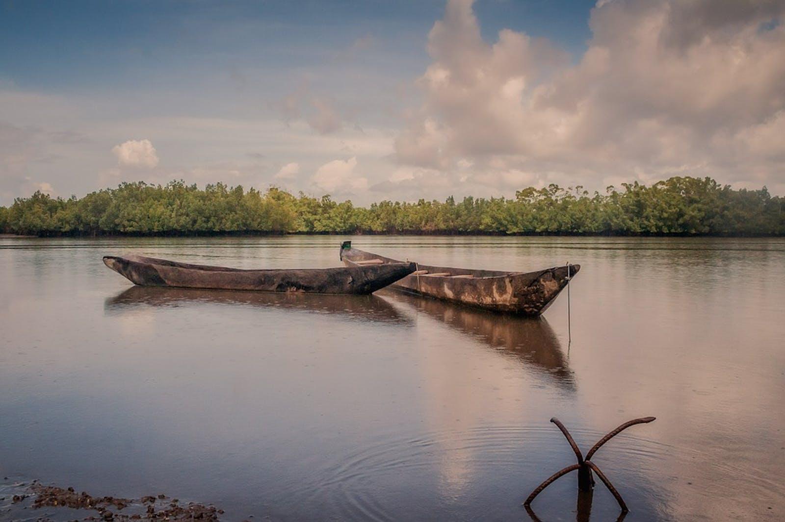 Guinean Mangroves