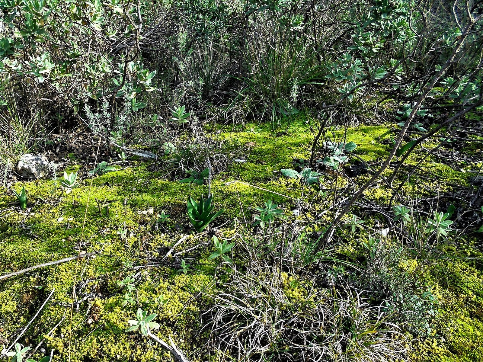 Southwest Iberian Mediterranean Sclerophyllous and Mixed Forests