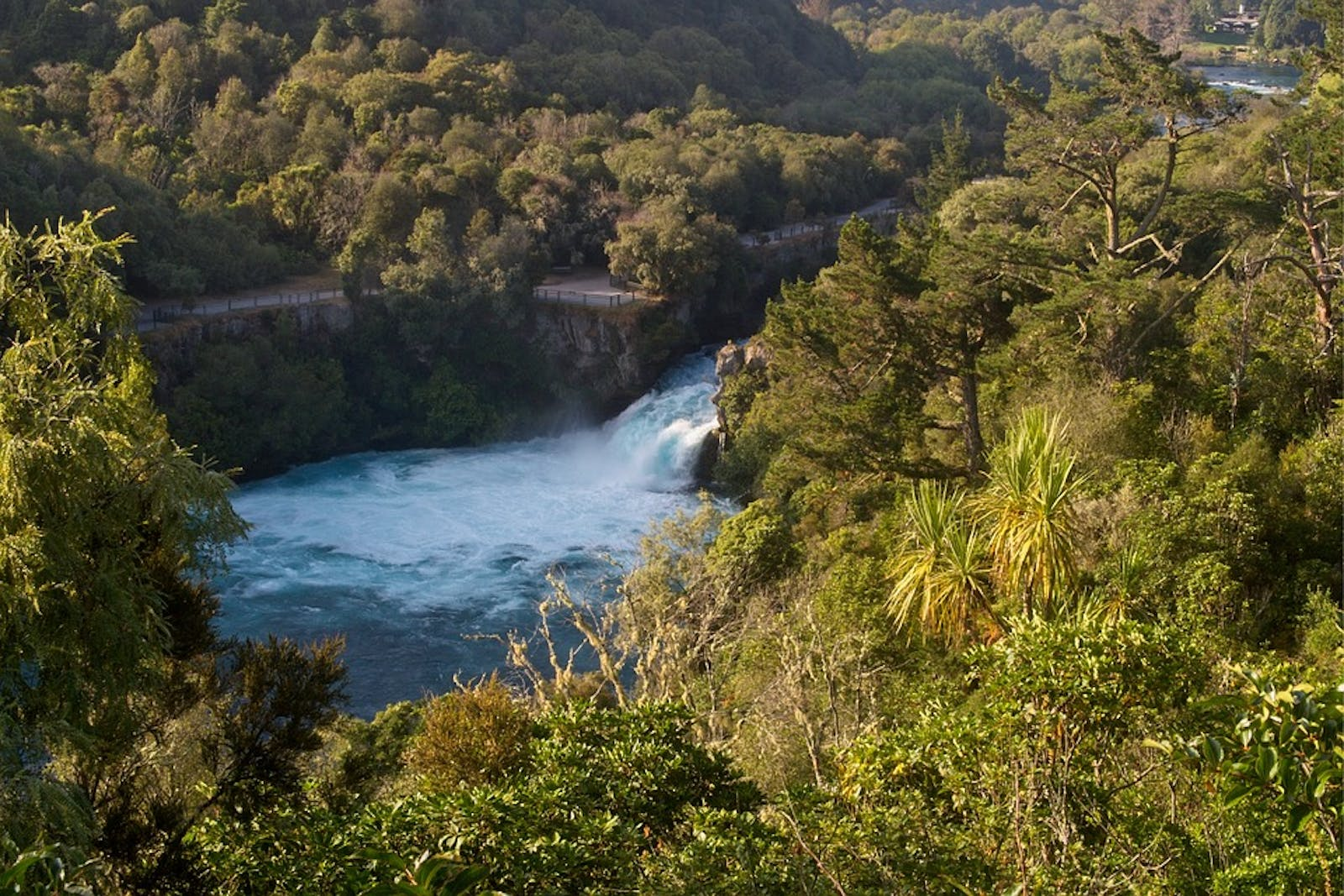 New Zealand North Island temperate forests