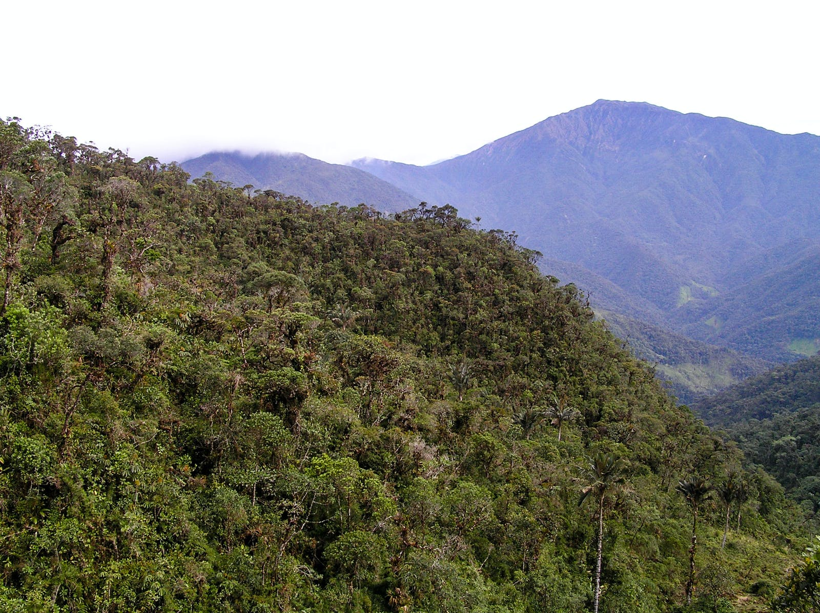 Northwest Andean Montane Forests