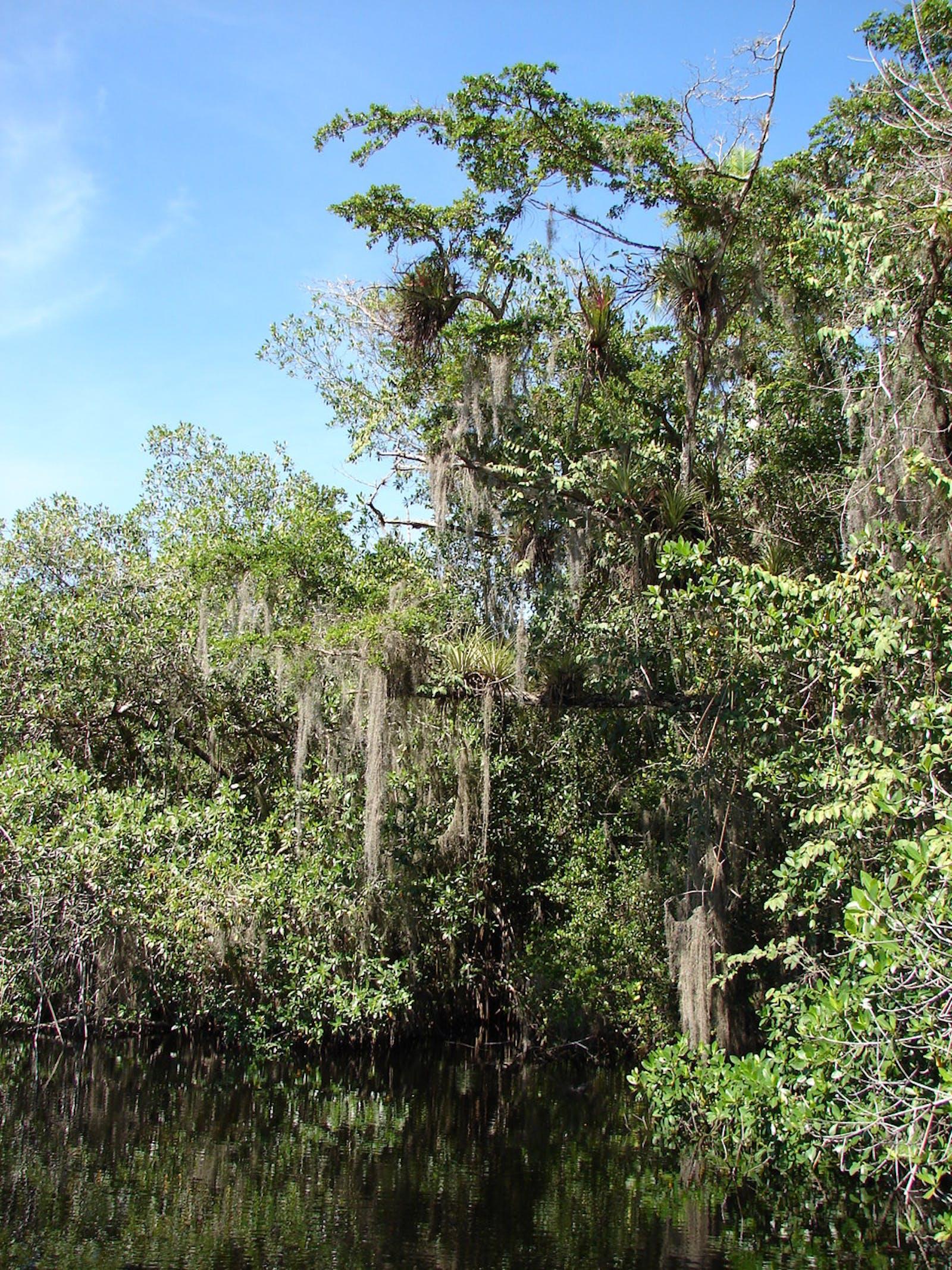 Cuban Wetlands