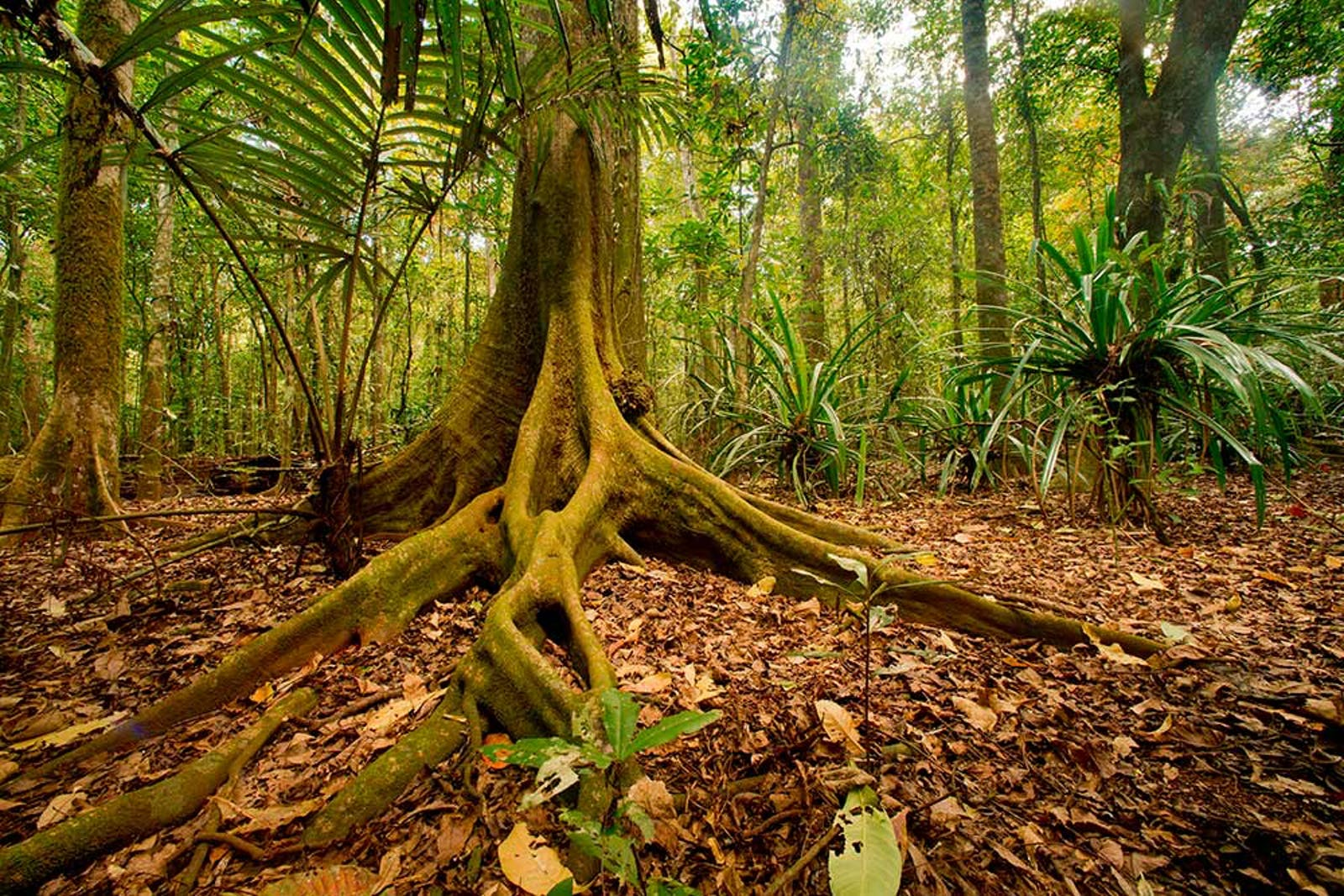 Christmas and Cocos Islands Tropical Forests