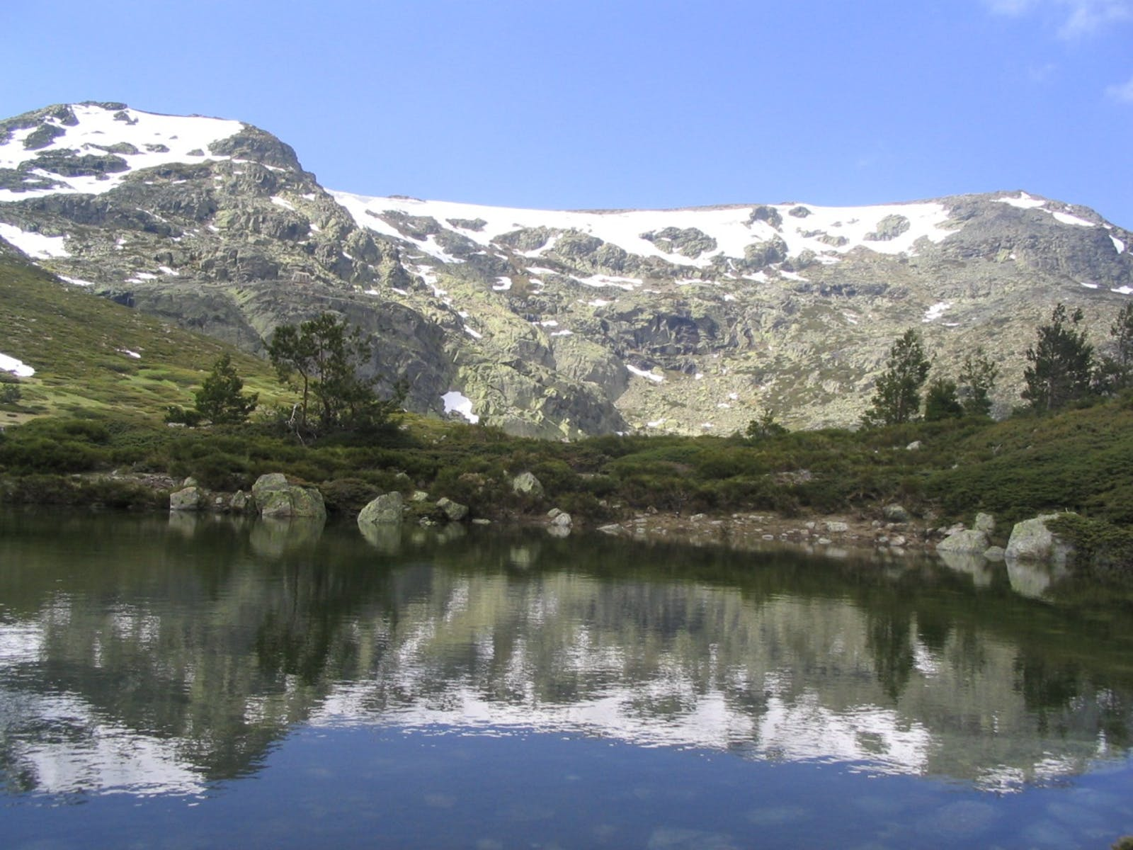 Iberian Conifer Forests