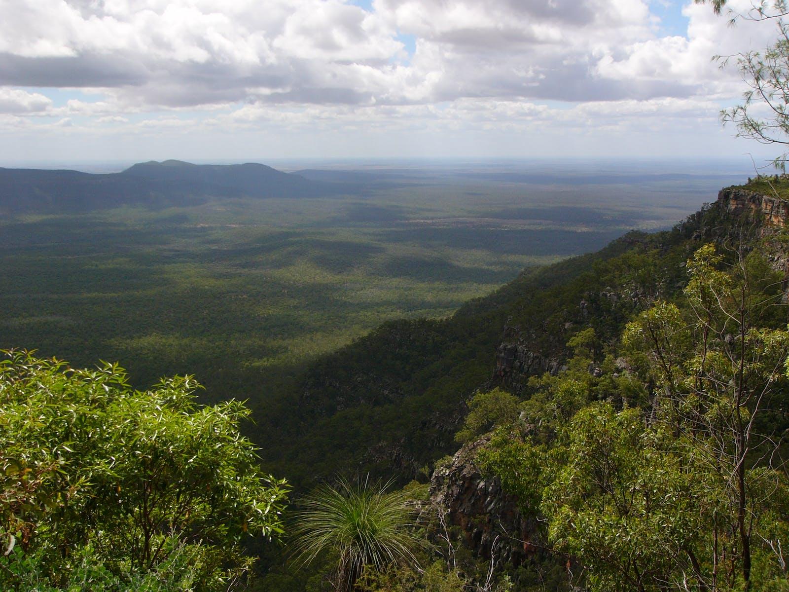 Brigalow Tropical Savanna