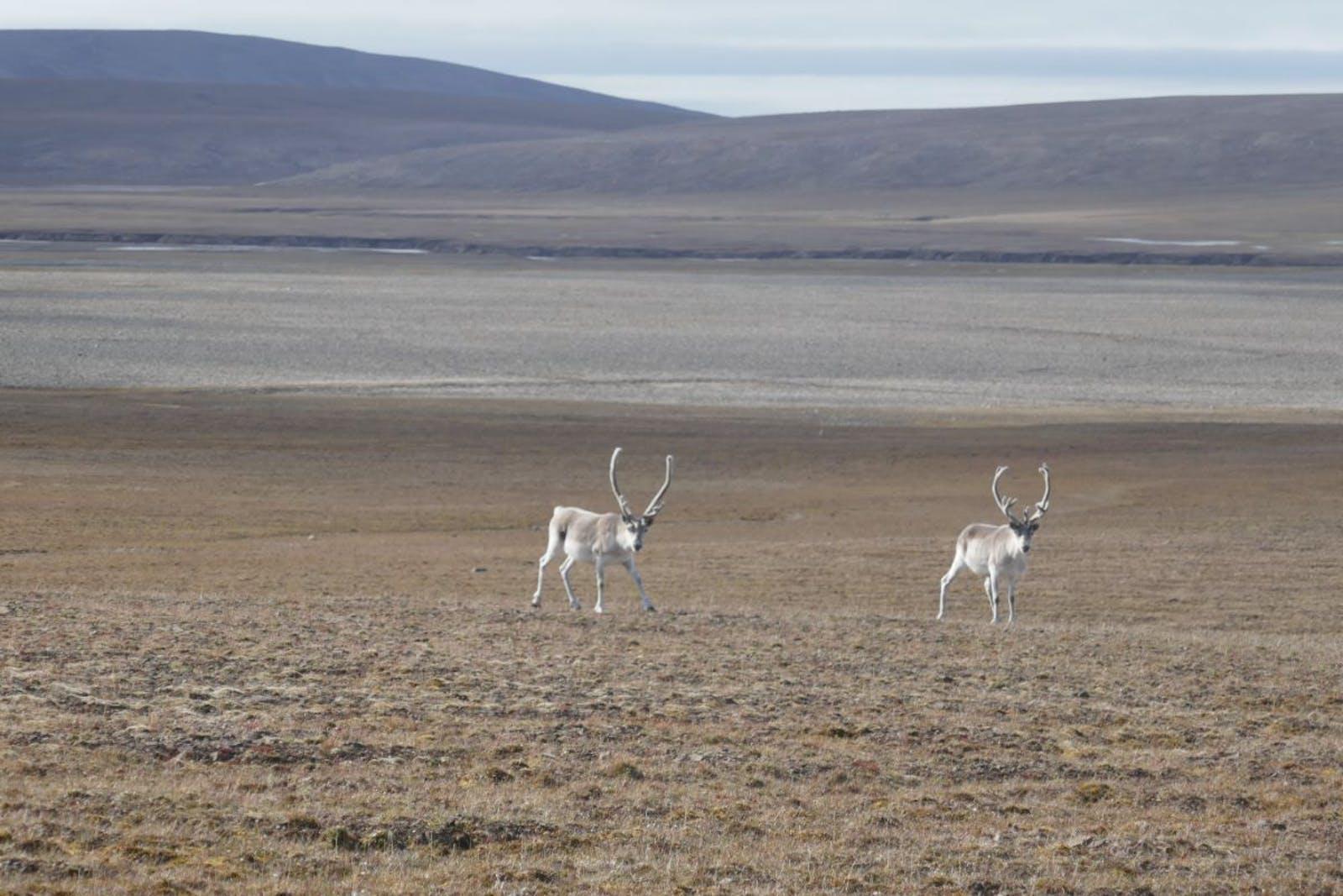 Canadian High Arctic Tundra