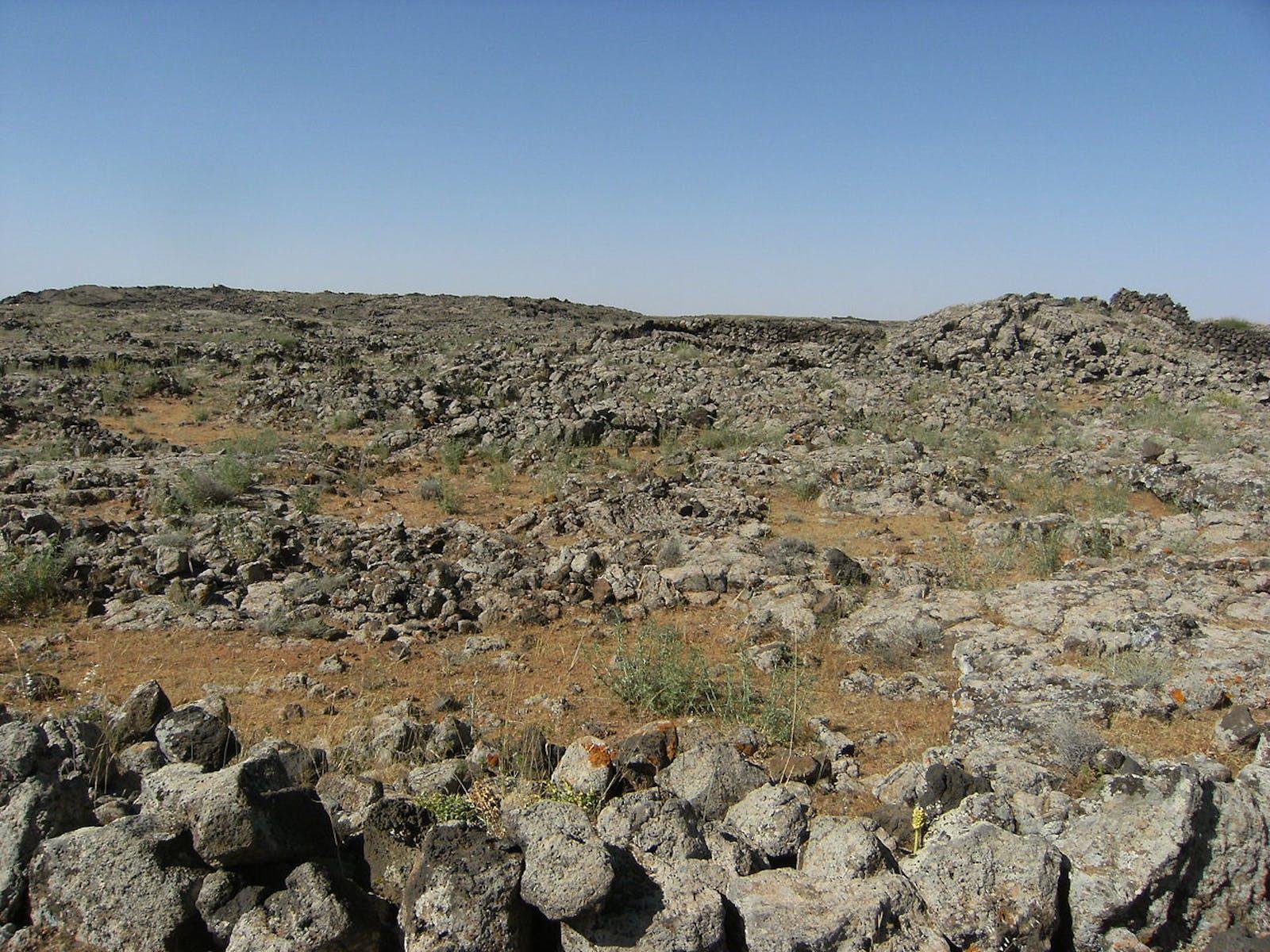 Mesopotamian Shrub Desert