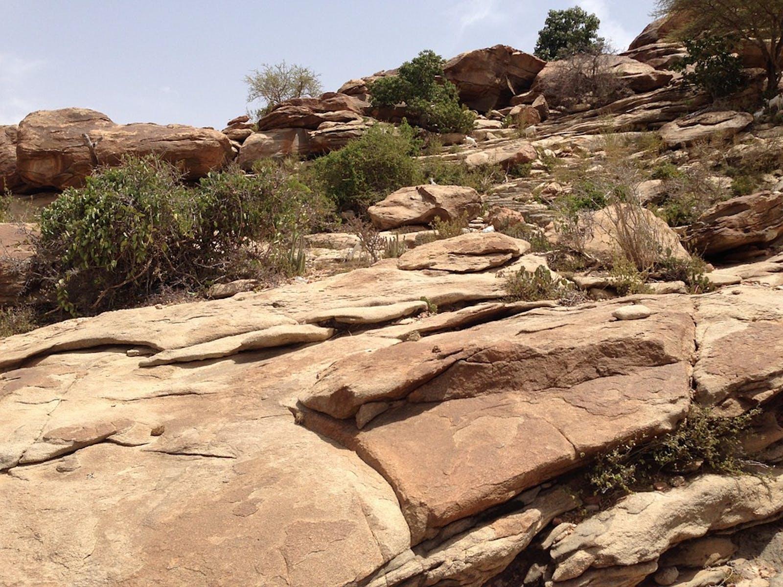 Horn of Africa Xeric Bushlands
