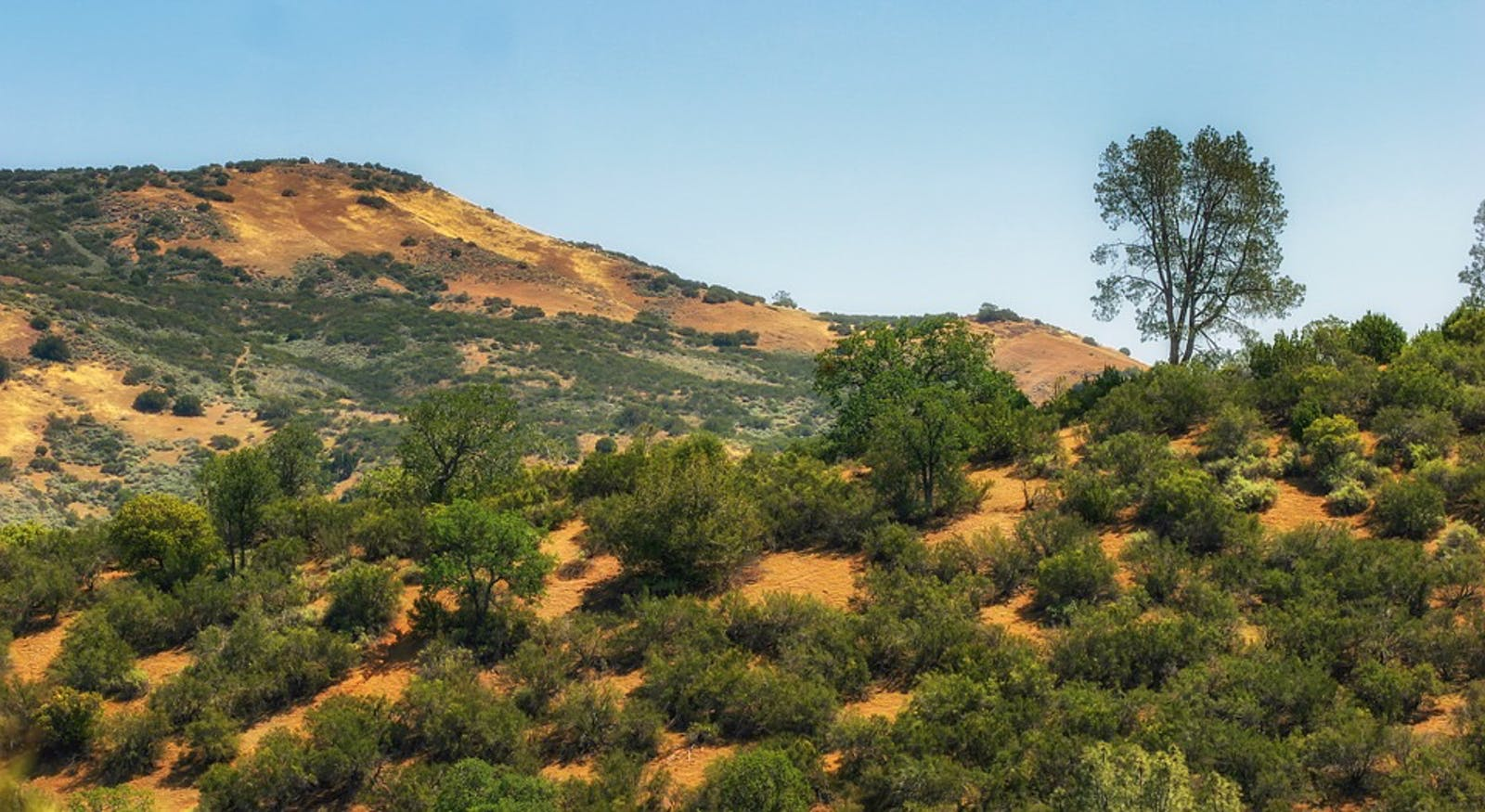 California Interior Chaparral and Woodlands