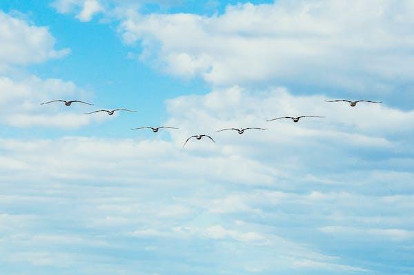 Celebrating World Migratory Bird Day