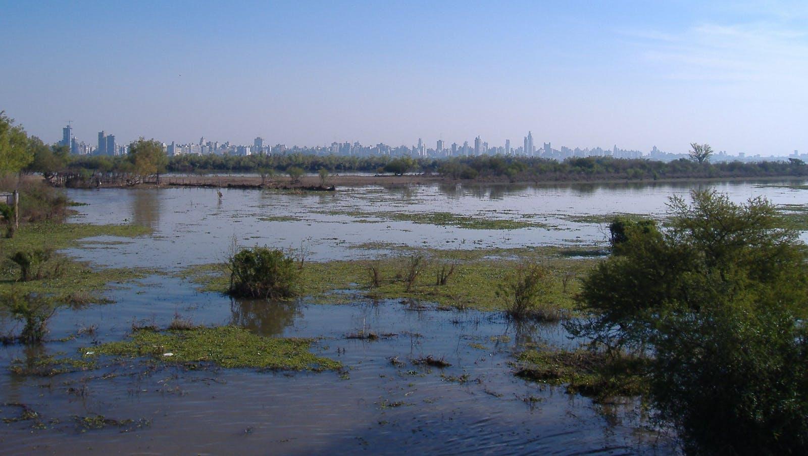Paraná Flooded Savanna