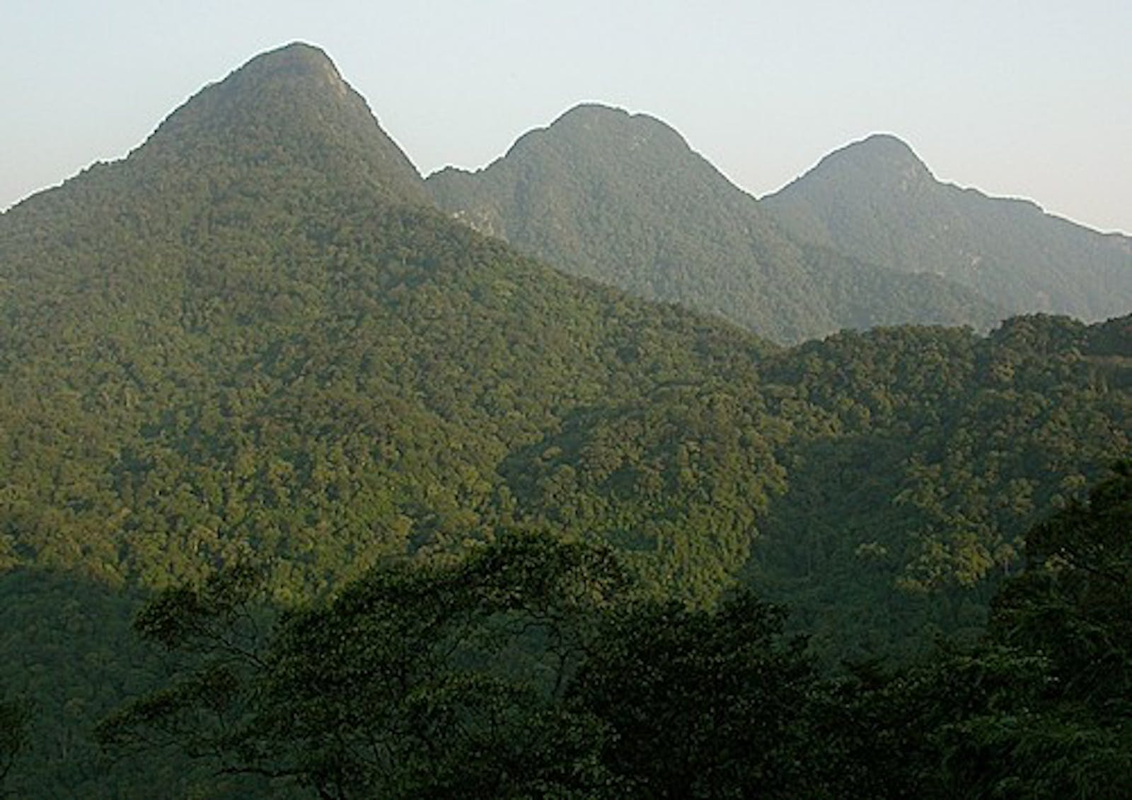 South China-Vietnam Subtropical Evergreen Forests