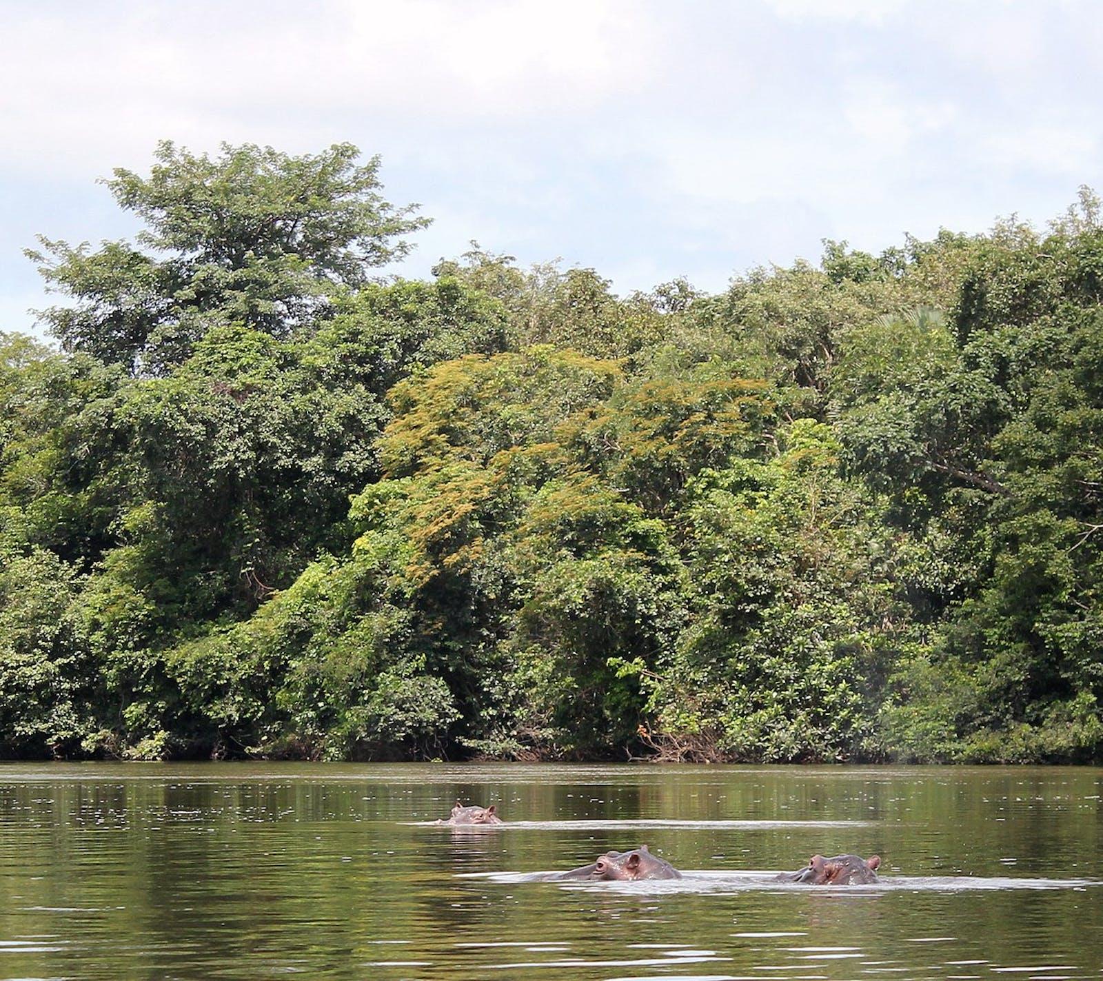 Guinean Forest-Savanna