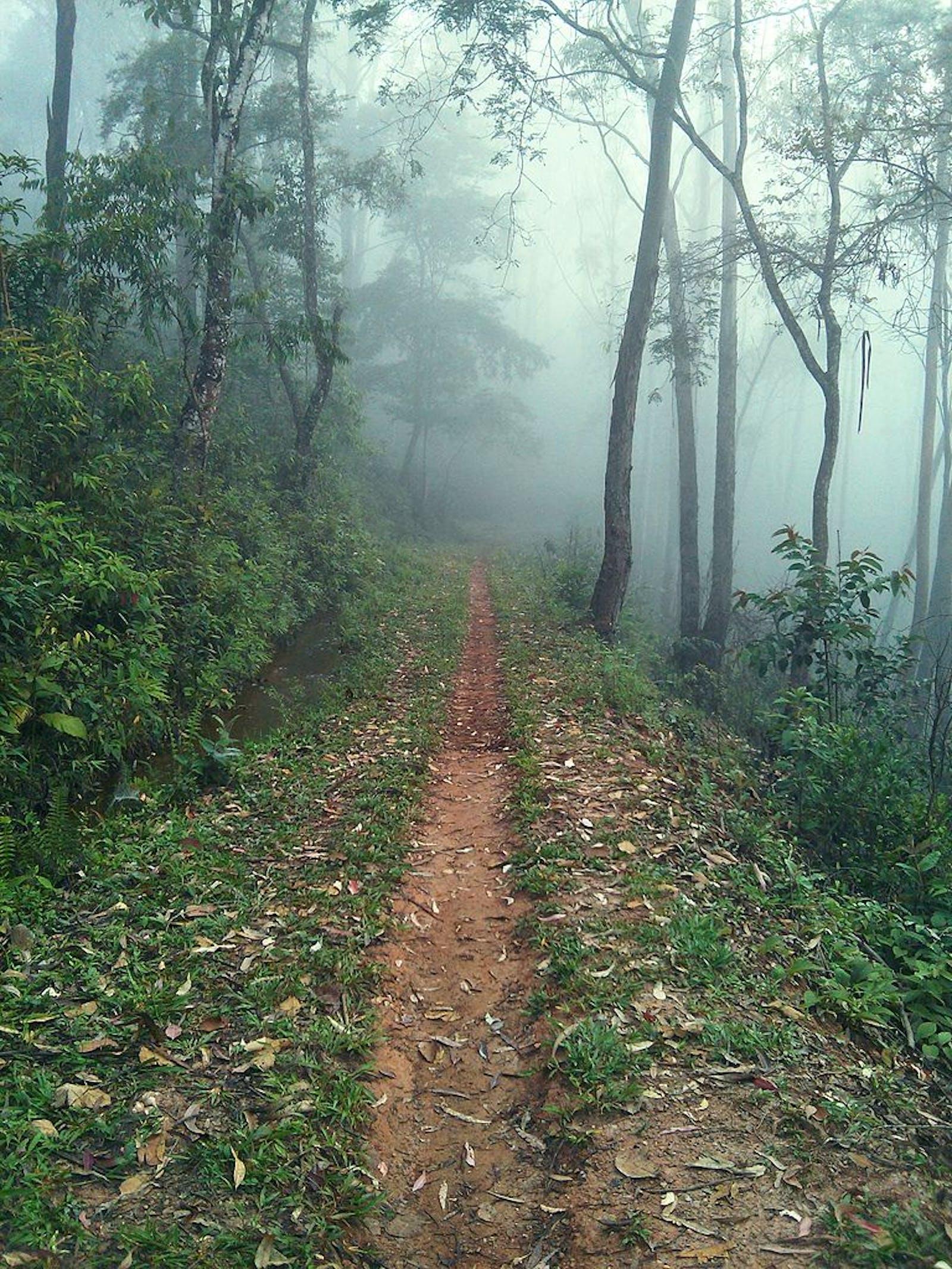 Bahía Interior Forests