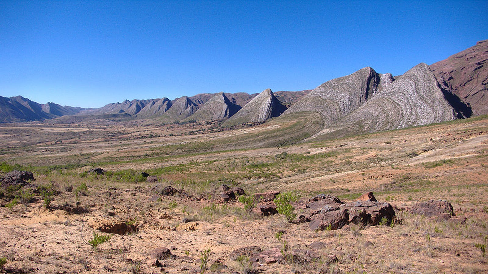 Bolivian Montane Dry Forests