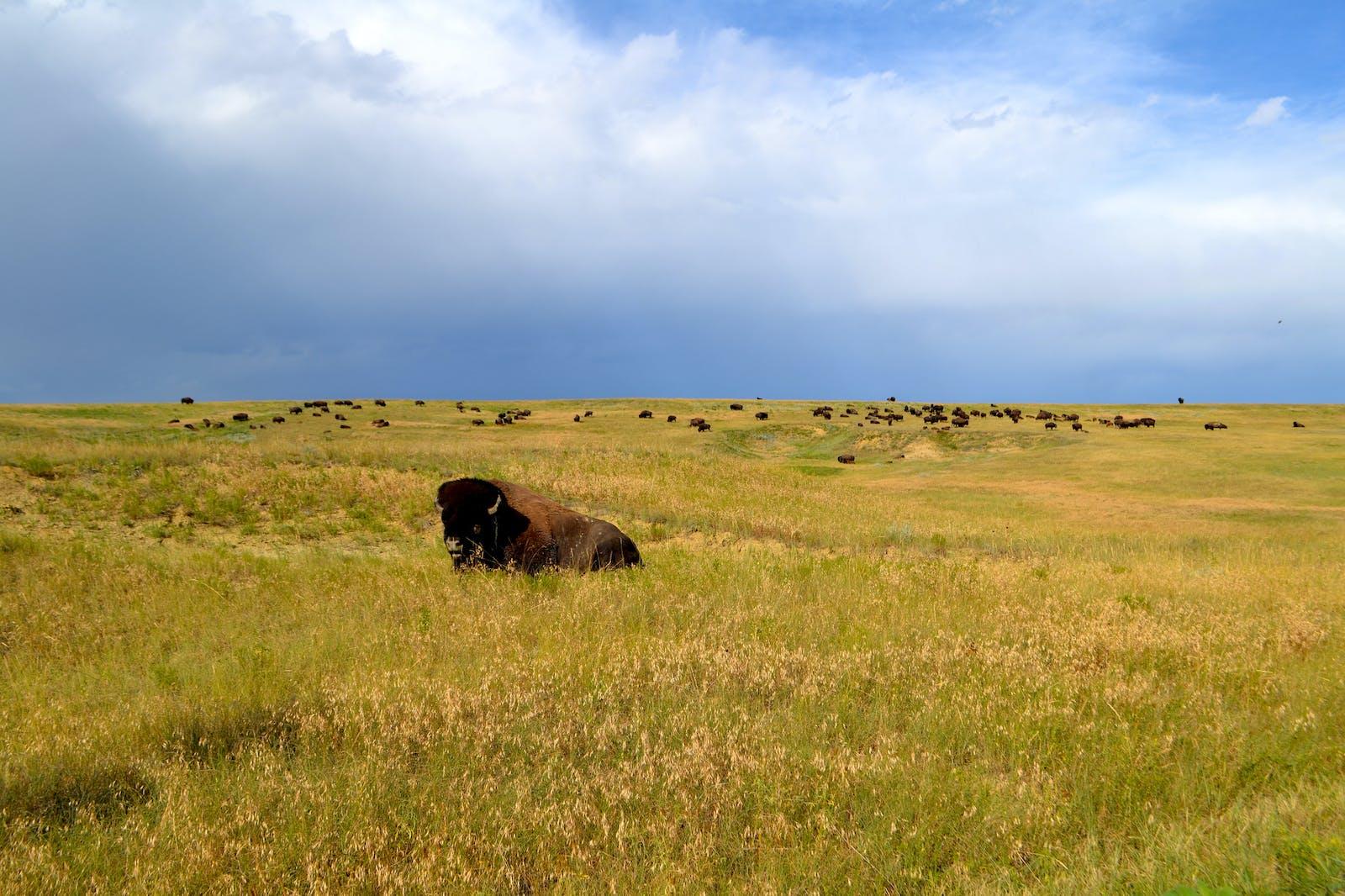 Northern Shortgrass Prairie