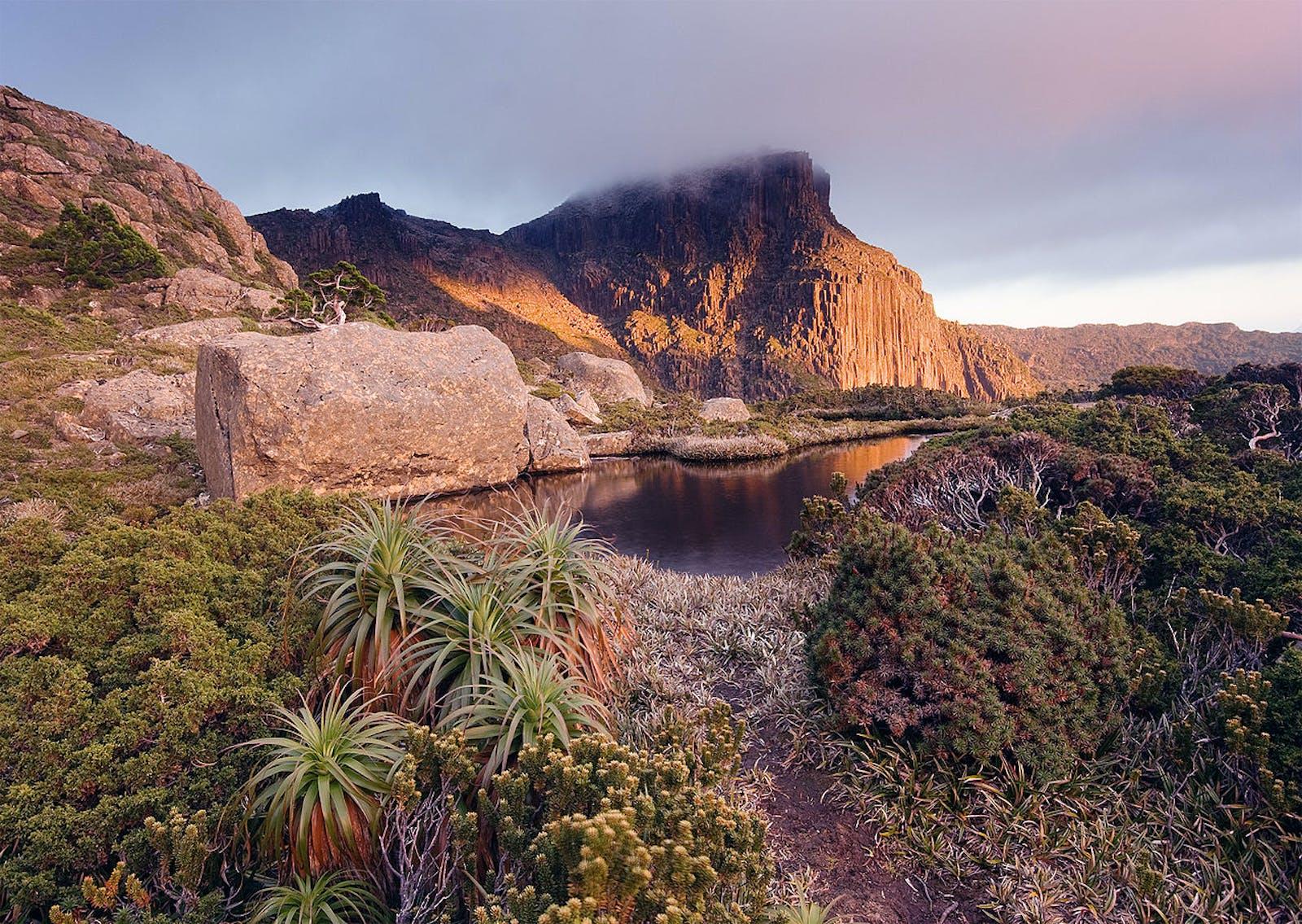 Tasmanian Temperate Rainforests