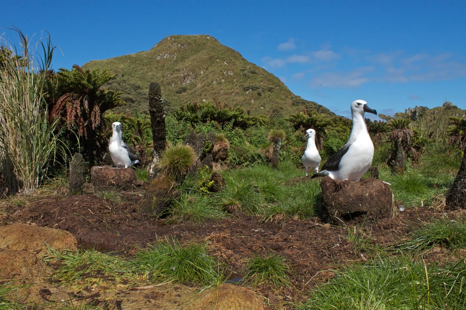 Tristan Da Cunha-Gough Islands Shrub and Grasslands