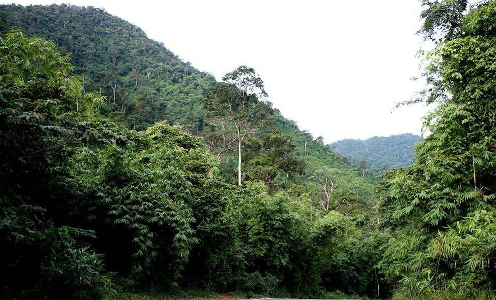 Tenasserim-South Thailand Semi-Evergreen Rainforests