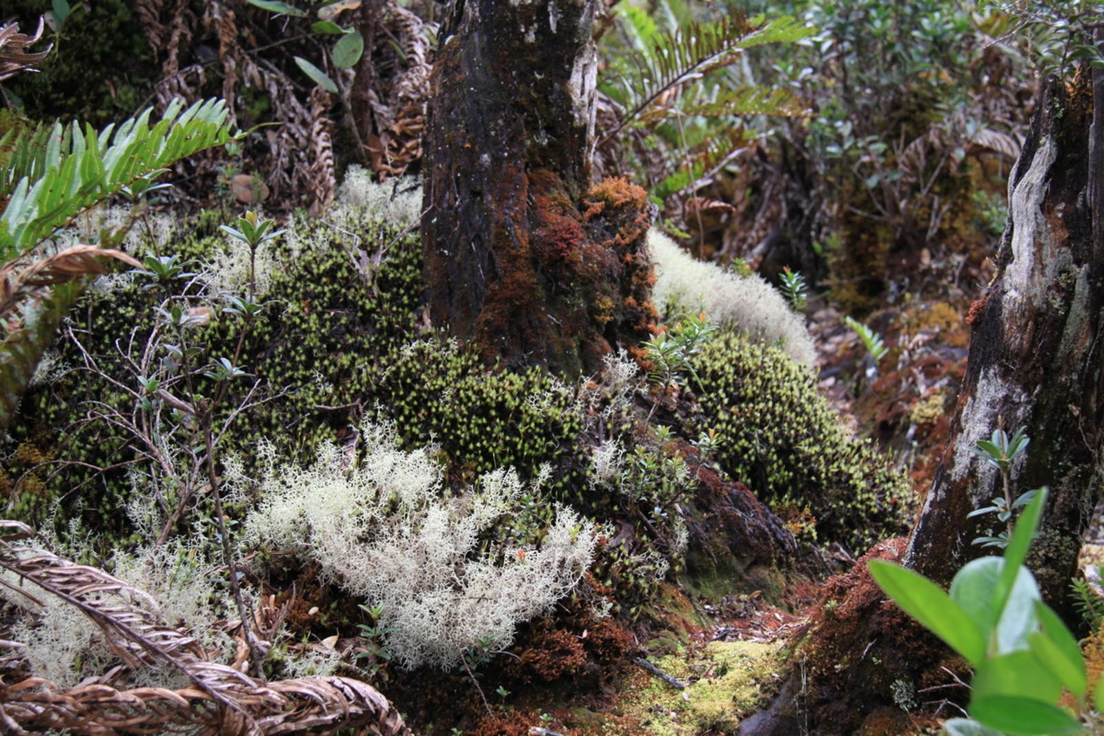 Sumatran Montane Rainforests