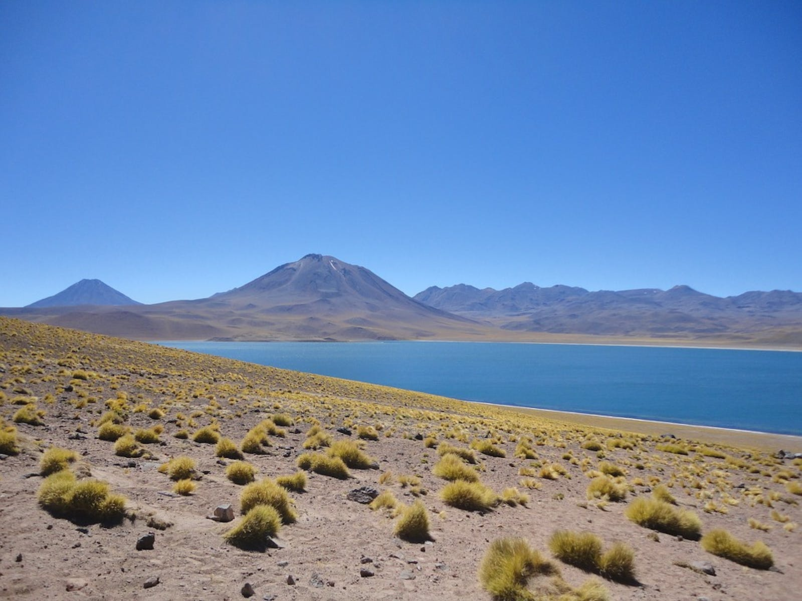 Southern Andean Steppe