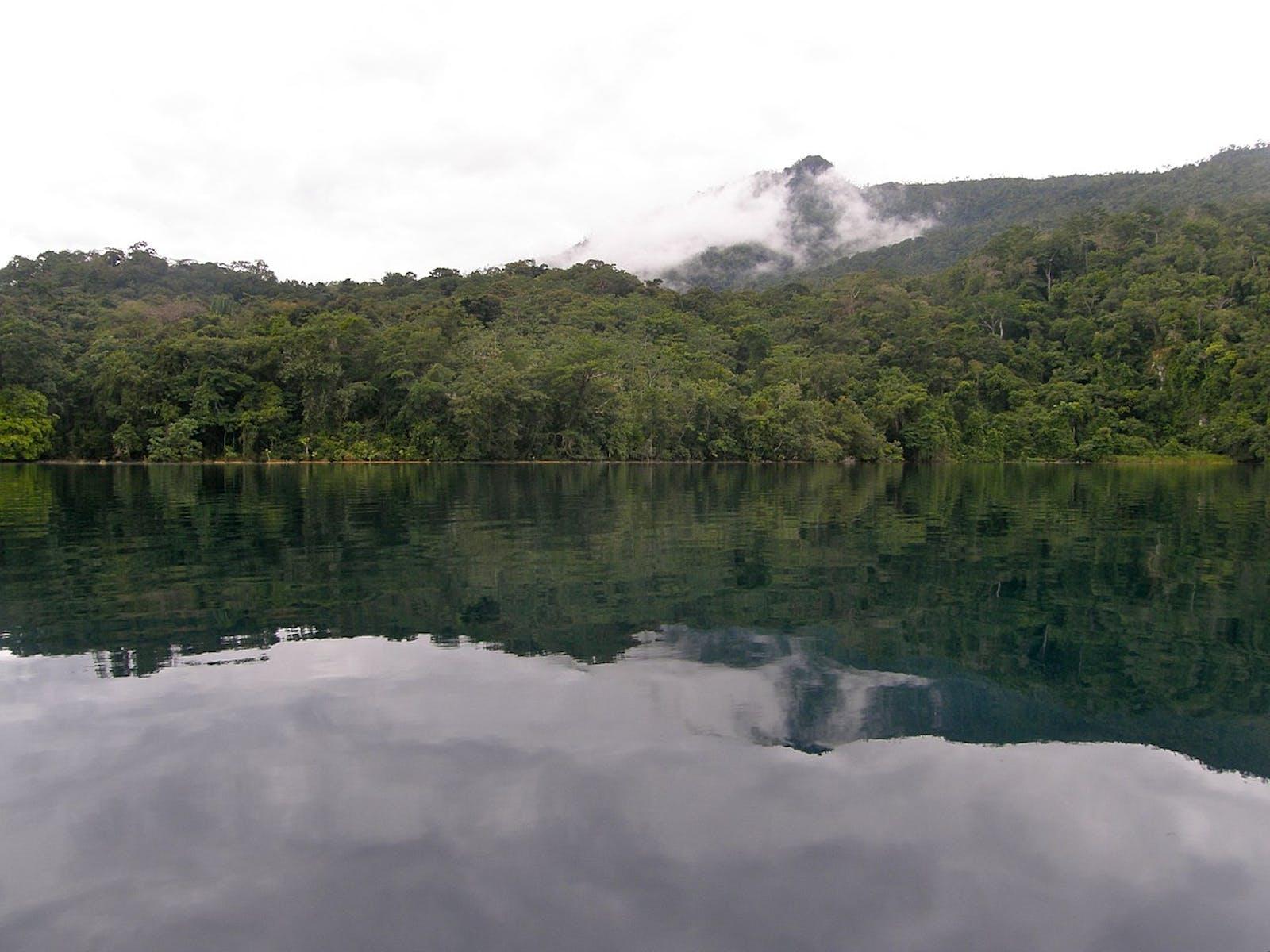 Chiapas Montane Forests