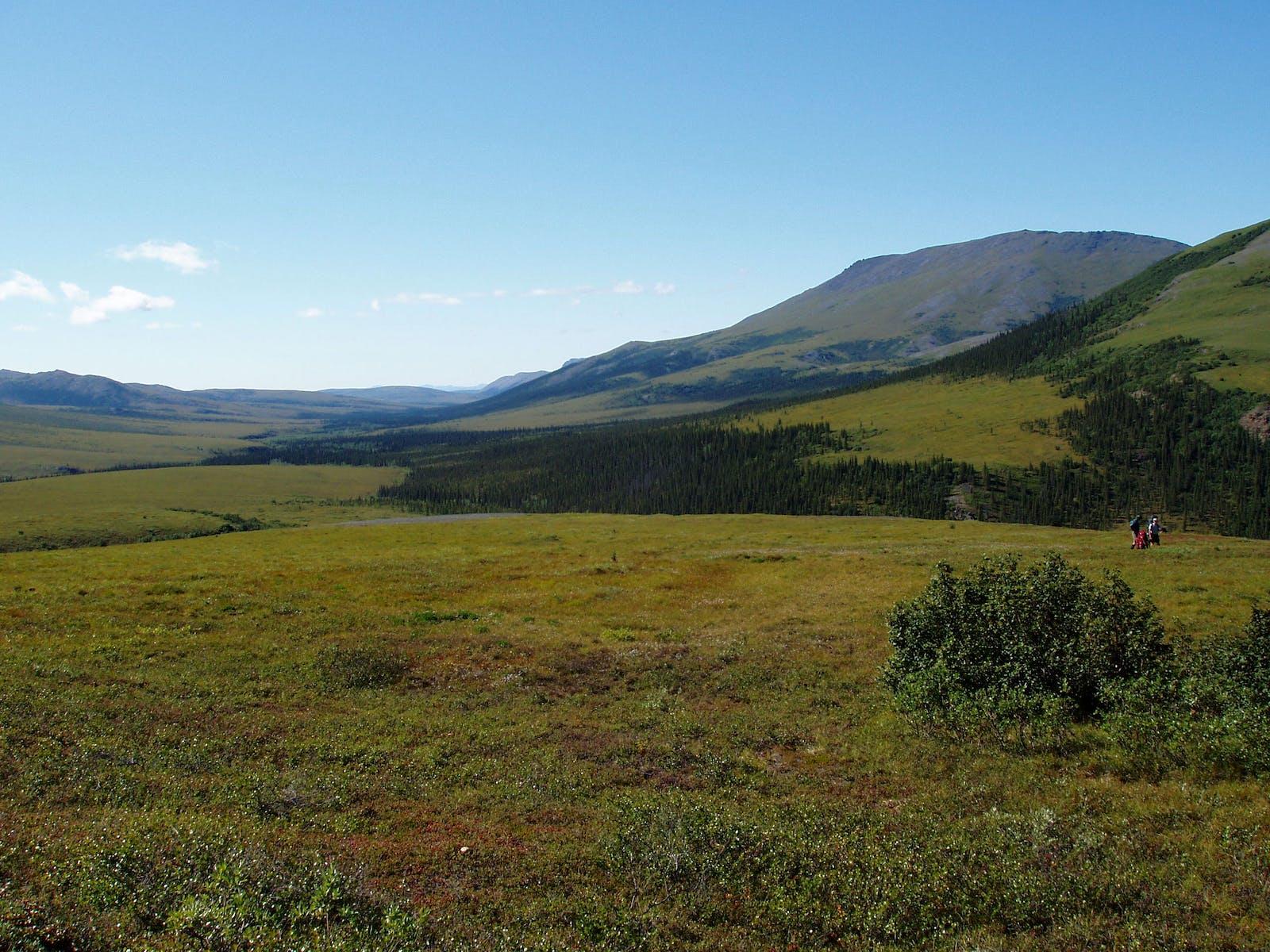 Interior Alaska-Yukon Lowland Taiga