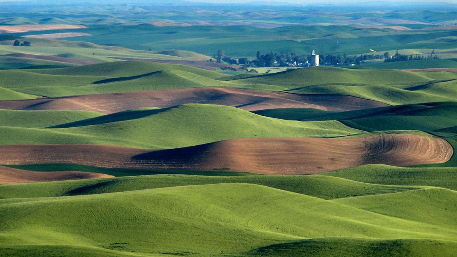 Palouse Prairie