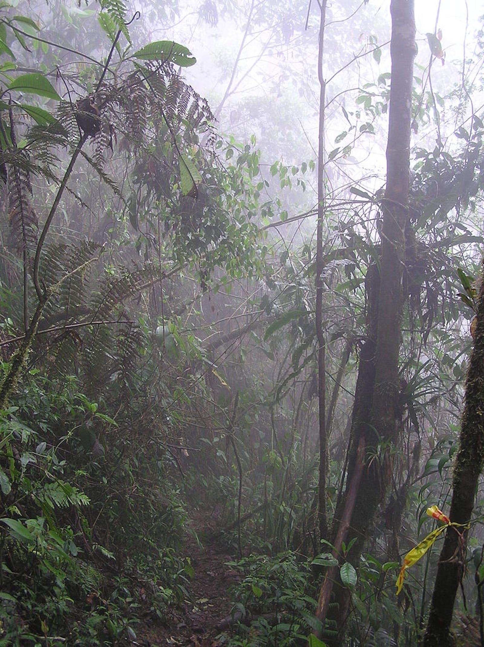 Chocó-Darién Moist Forests