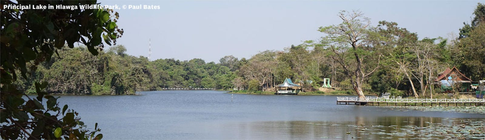 Irrawaddy Freshwater Swamp Forests