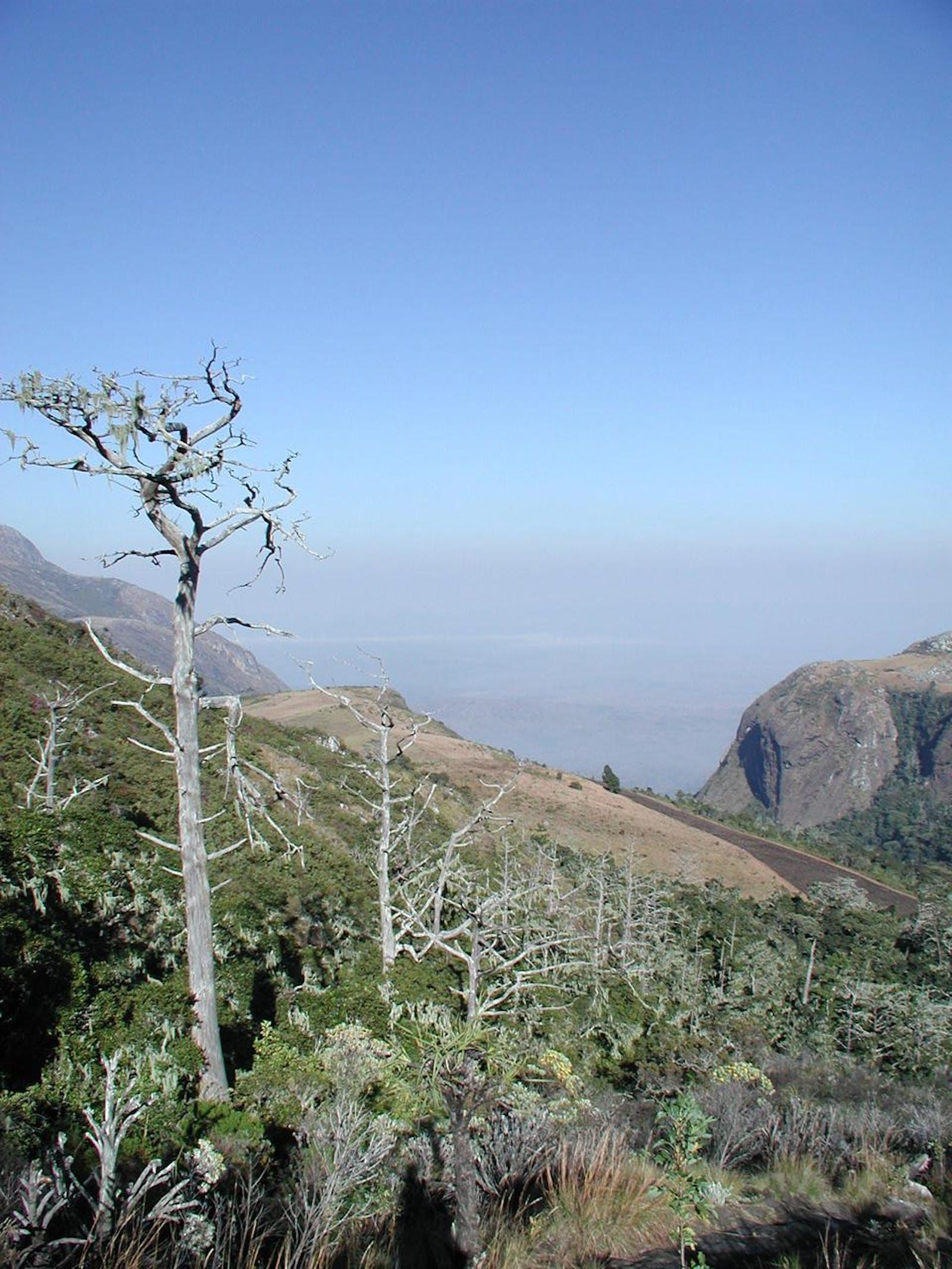 Mulanje Montane Forest-Grassland