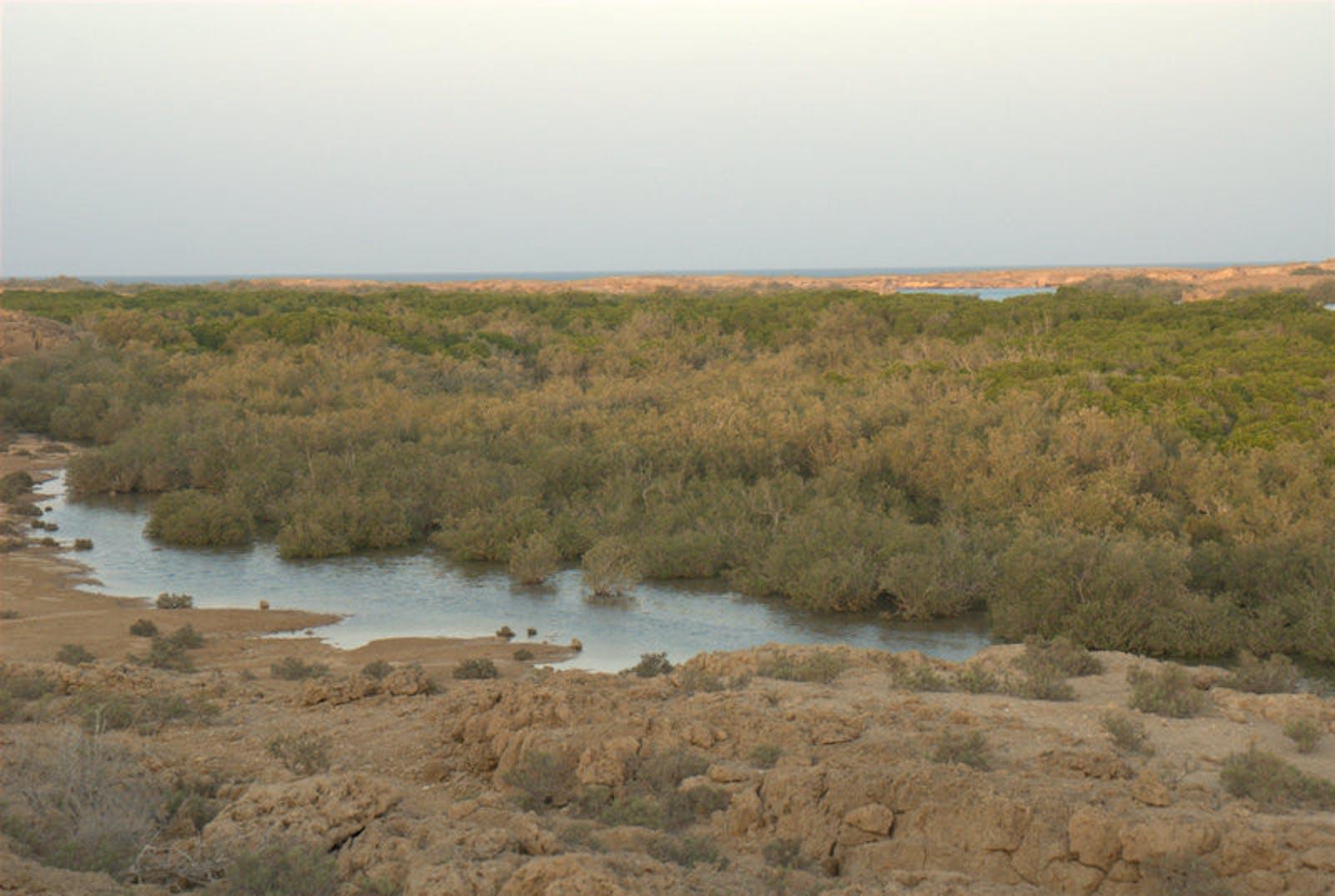 Red Sea Mangroves