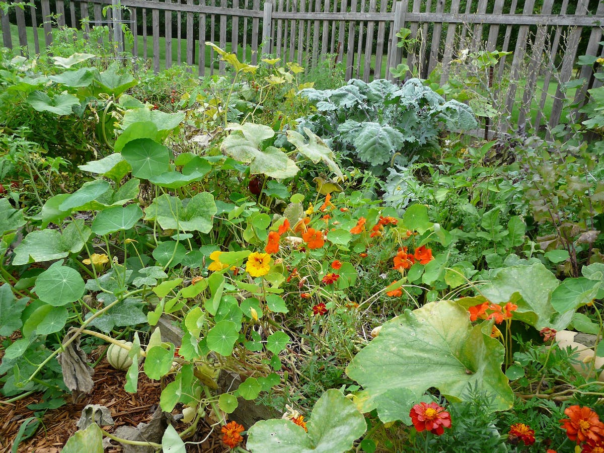 Food insecurity revives the victory gardens movement